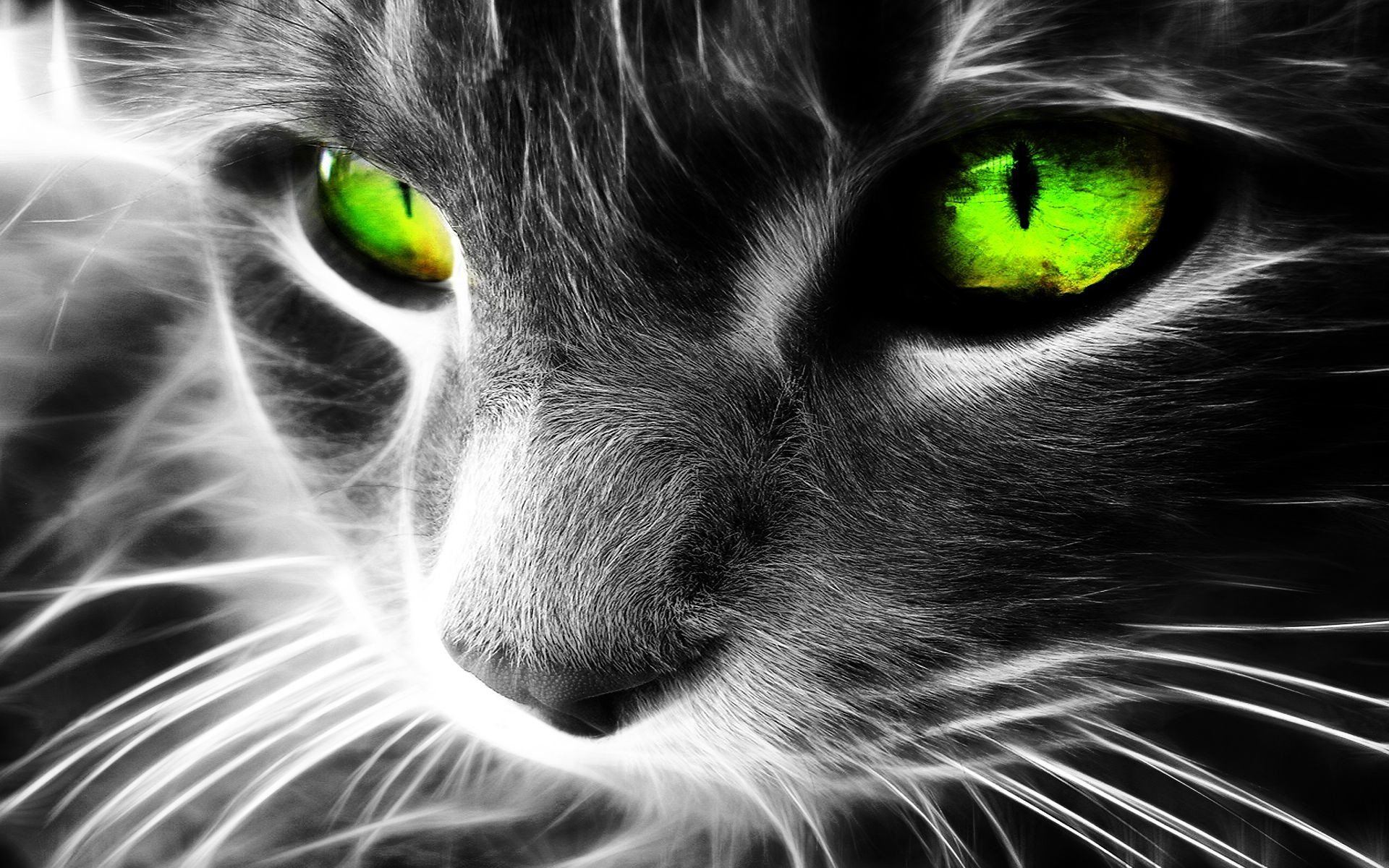 Desktop This HD wallpaper green-cat in animal wallpapers was added to  gallery on August This image have eight hundred and twenty views and eight  likes.