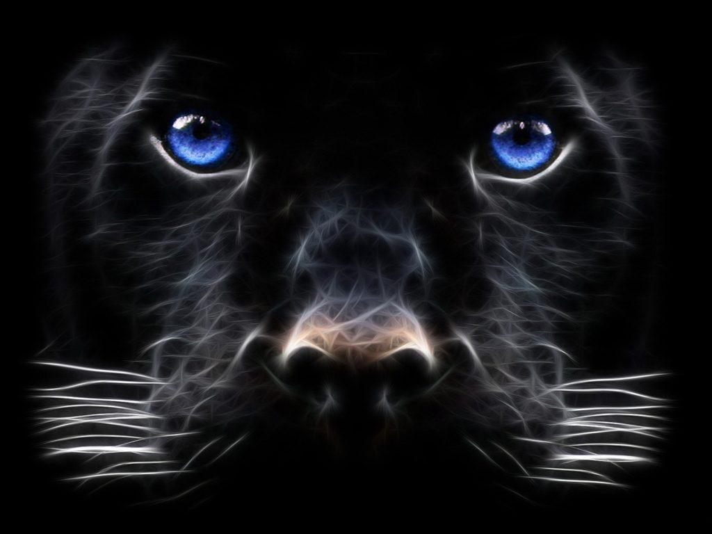 HD Wallpaper   Background ID:433886. Animal Black Panther