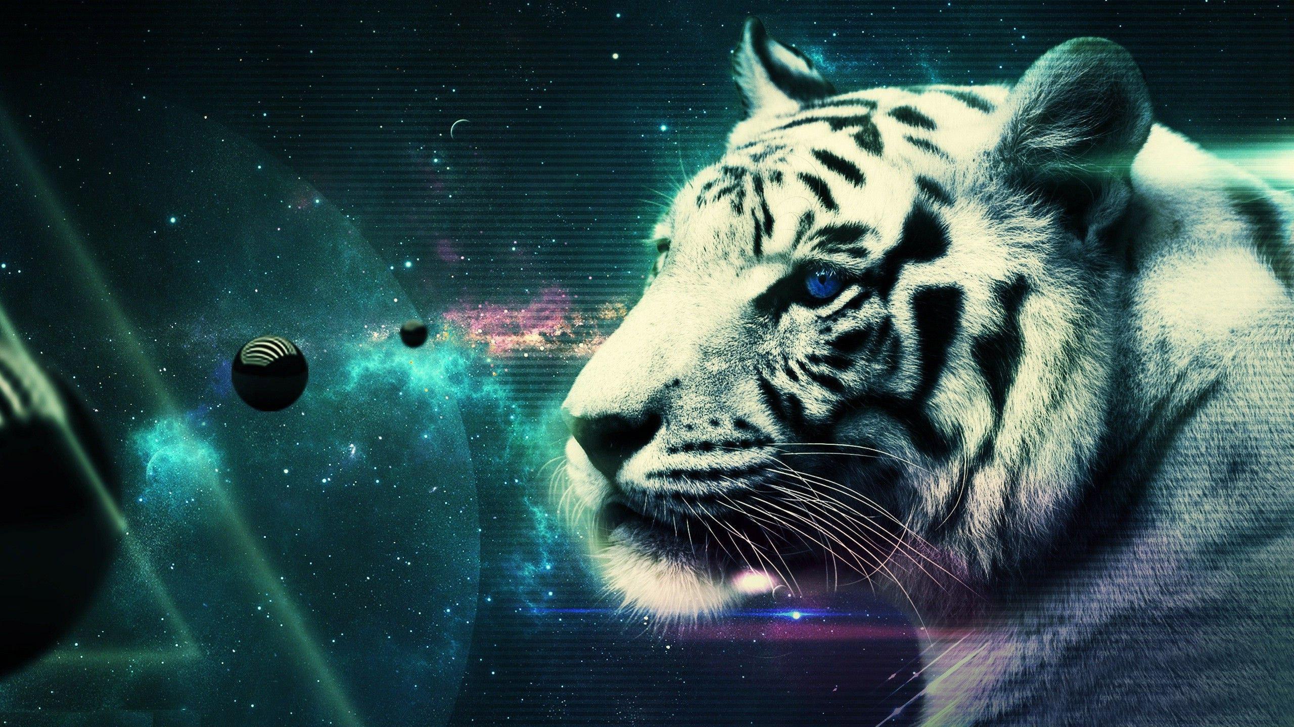 0 Tiger wallpapers hd free download White Tiger Wallpapers HD Animals  Wallpaper