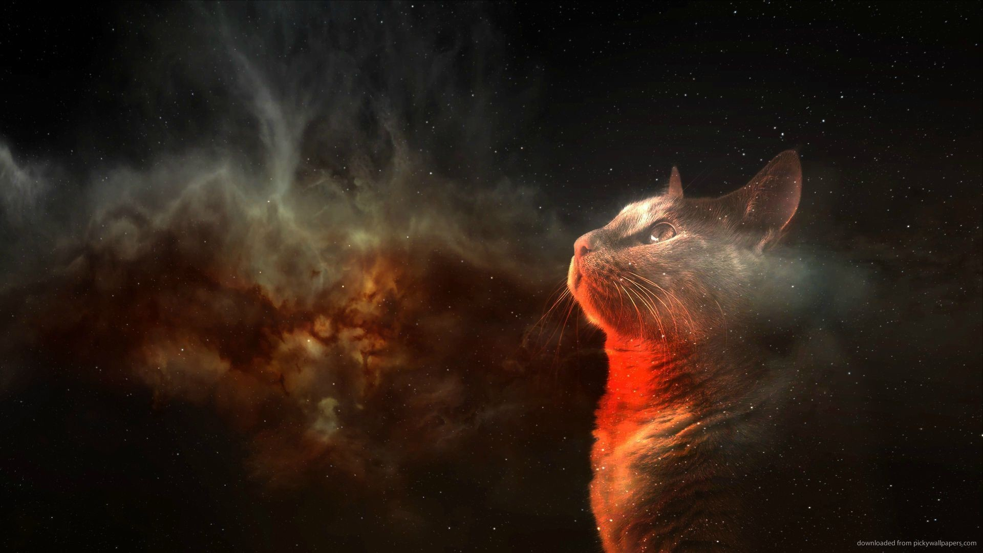 Amazing Space, cat, animals, HD Wallpaper and FREE Stock .