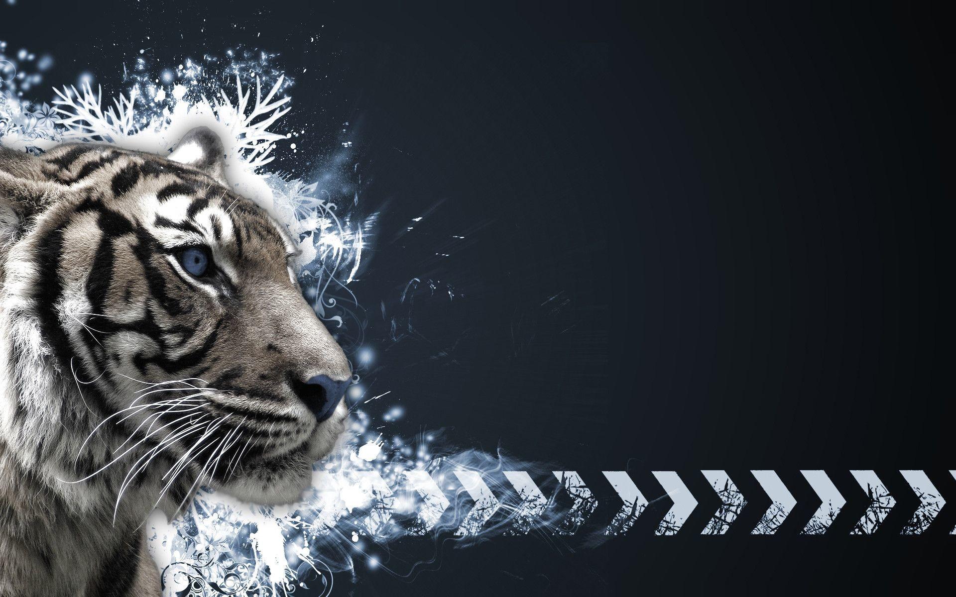 0 White Tiger Wallpapers HD White Tiger Wallpapers HD