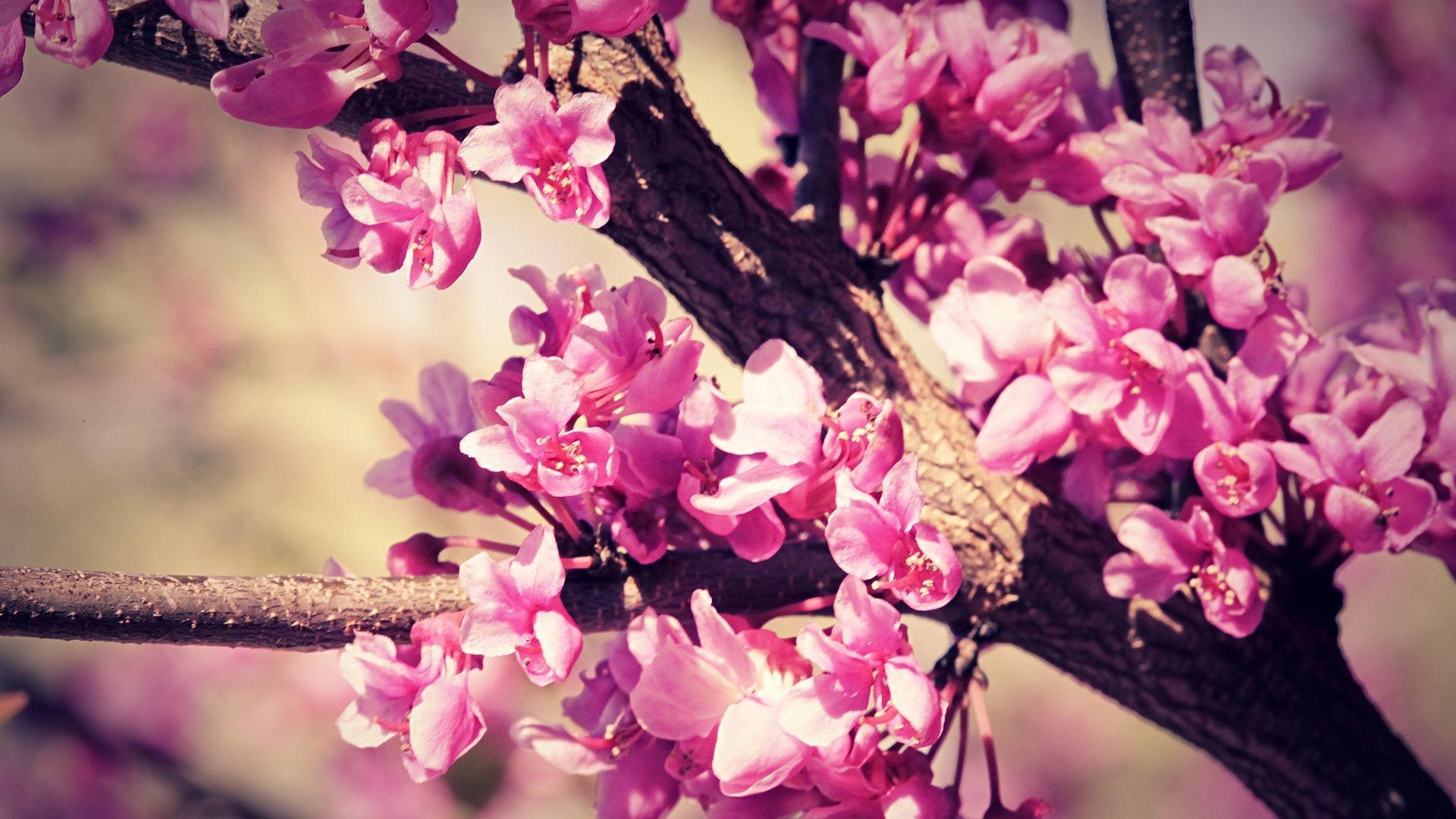 1000x833px Cute Tumblr Pink Wallpaper