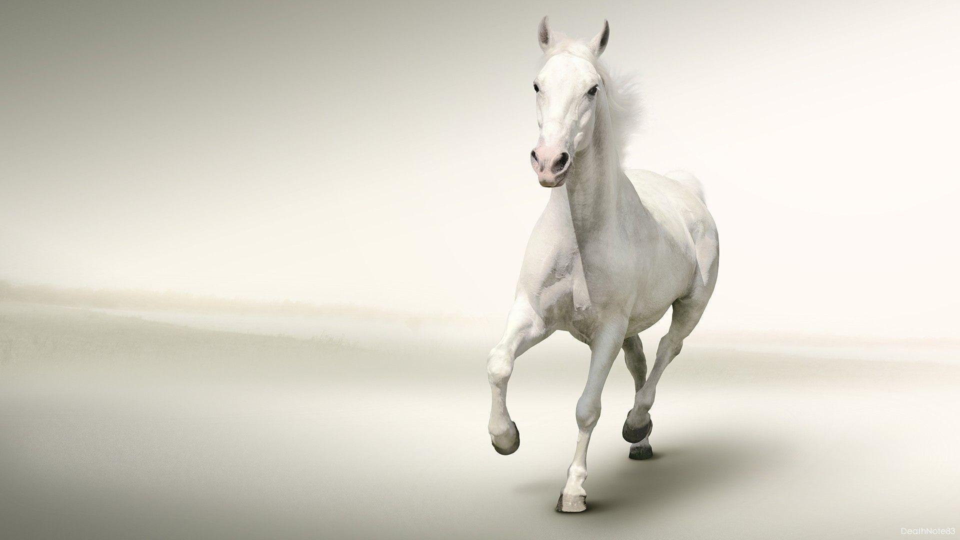 0 White Horse Wallpapers White Horse Wallpapers