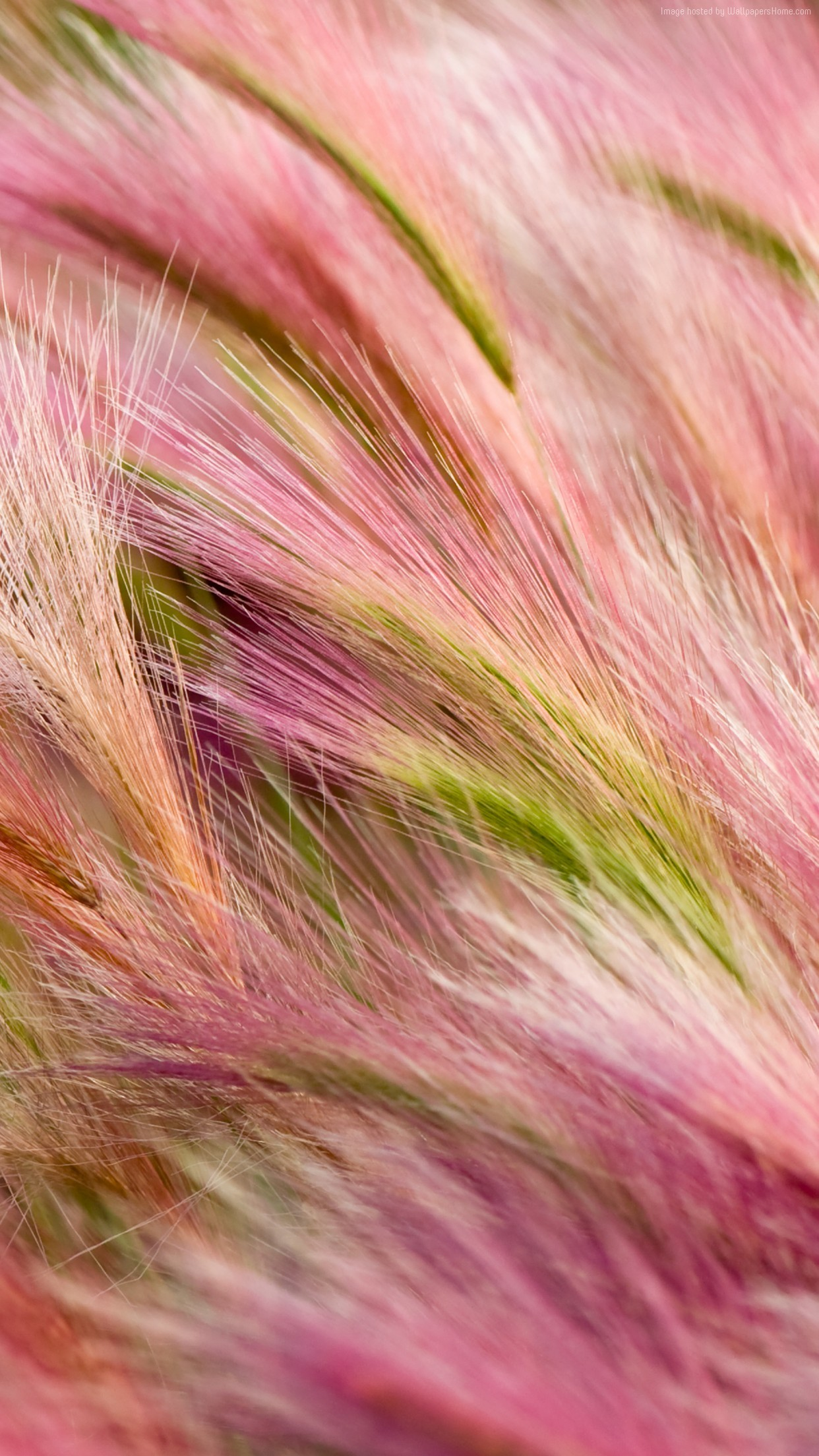Red, pink, grass, abstract, apple, wallpaper, iPhone, clean,