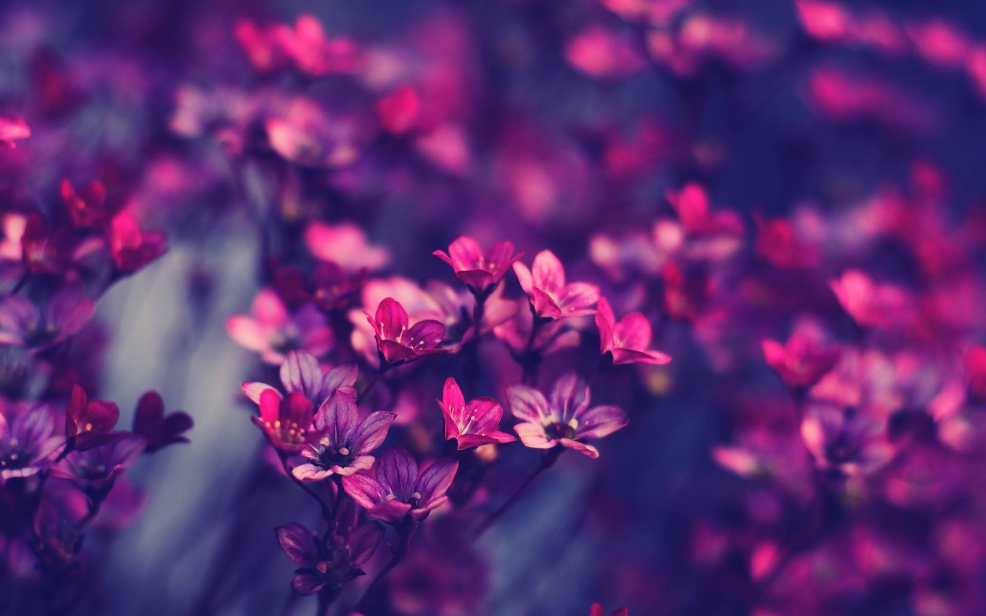 Purple pink flowers wallpaper