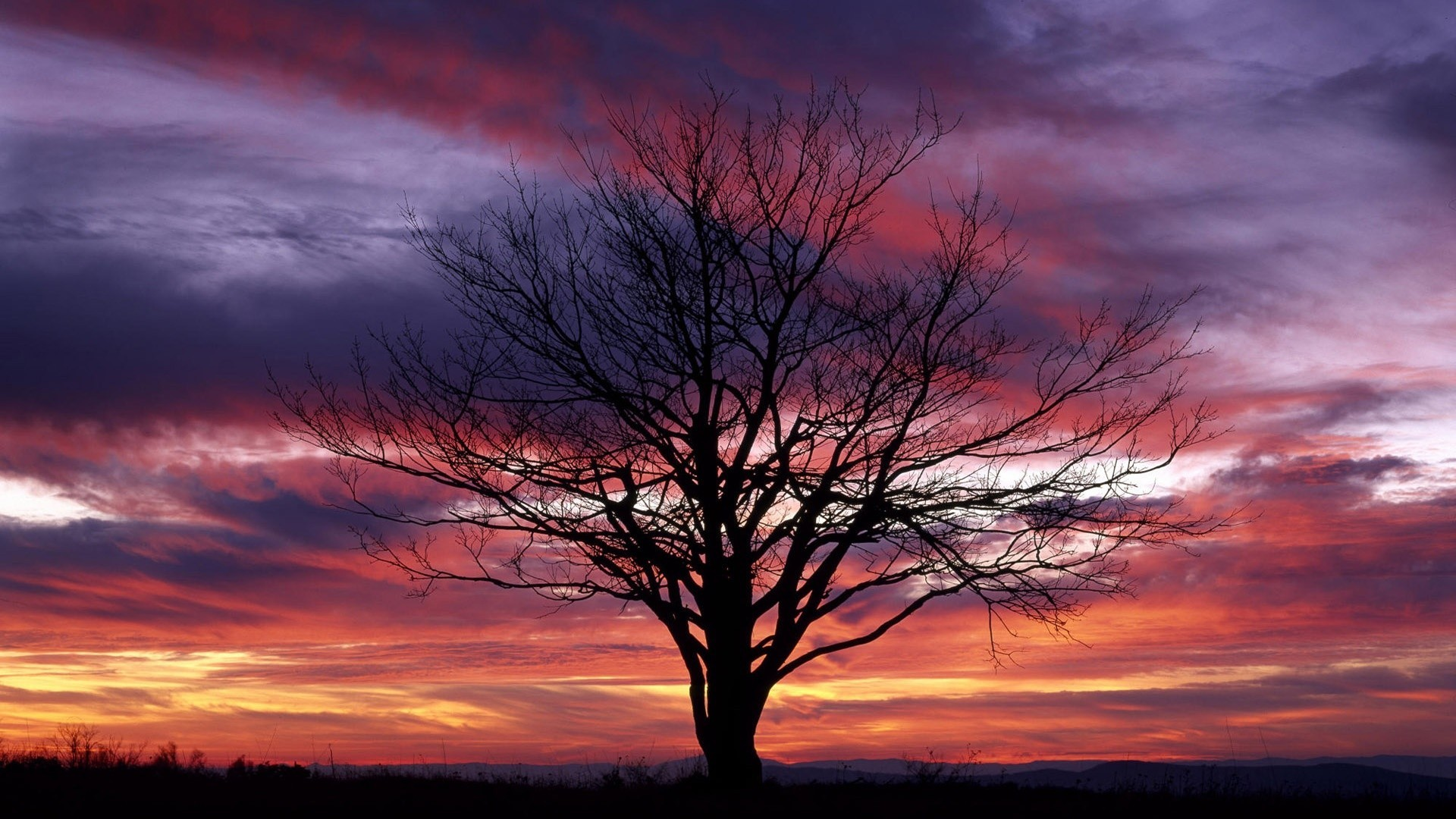 Red Tag – Purple Red Sunset Trees Sunsets Tree Nature Sky Picture Download  for HD 16