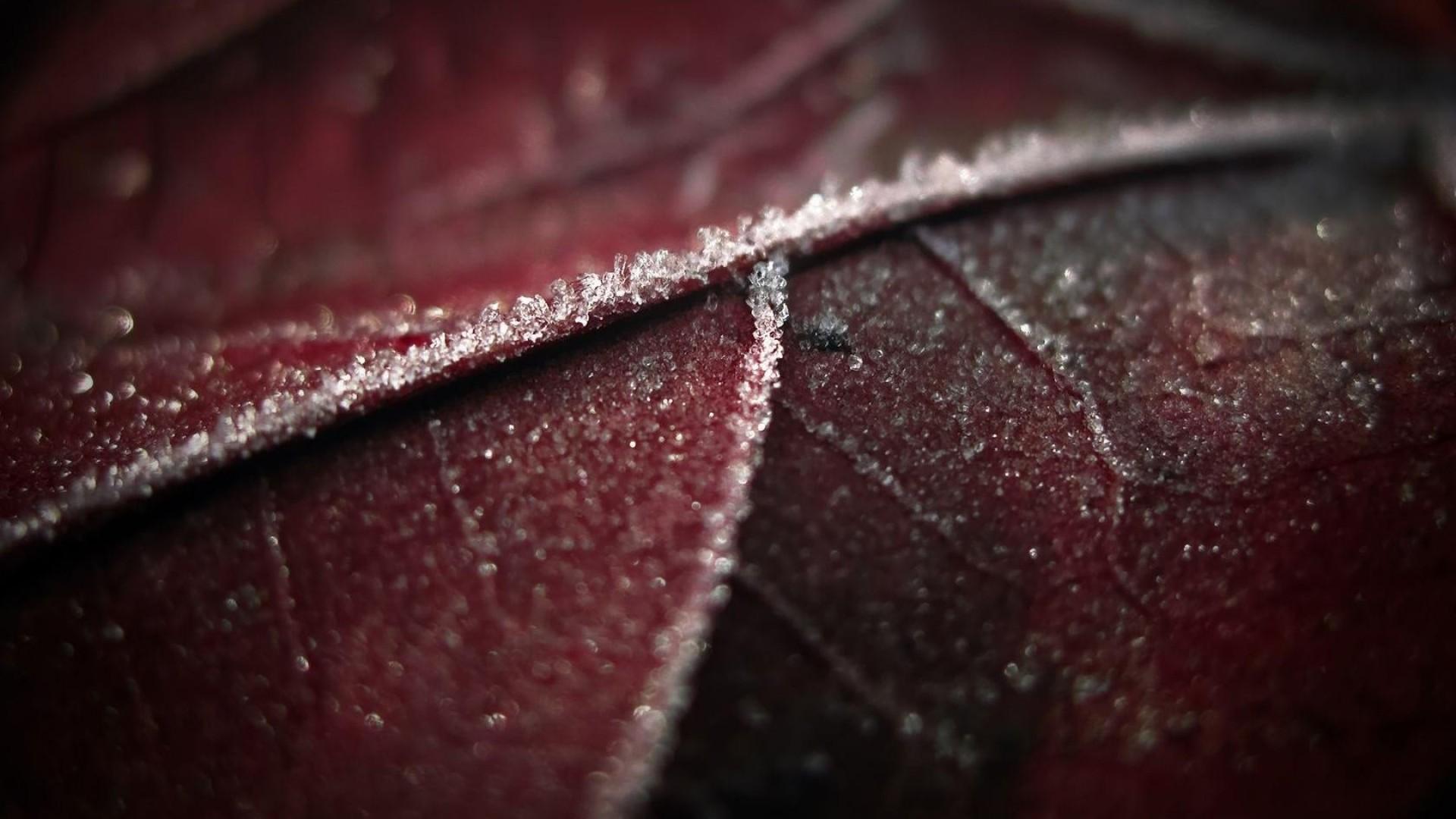 Preview wallpaper leaf, brown, wet, dark 1920×1080