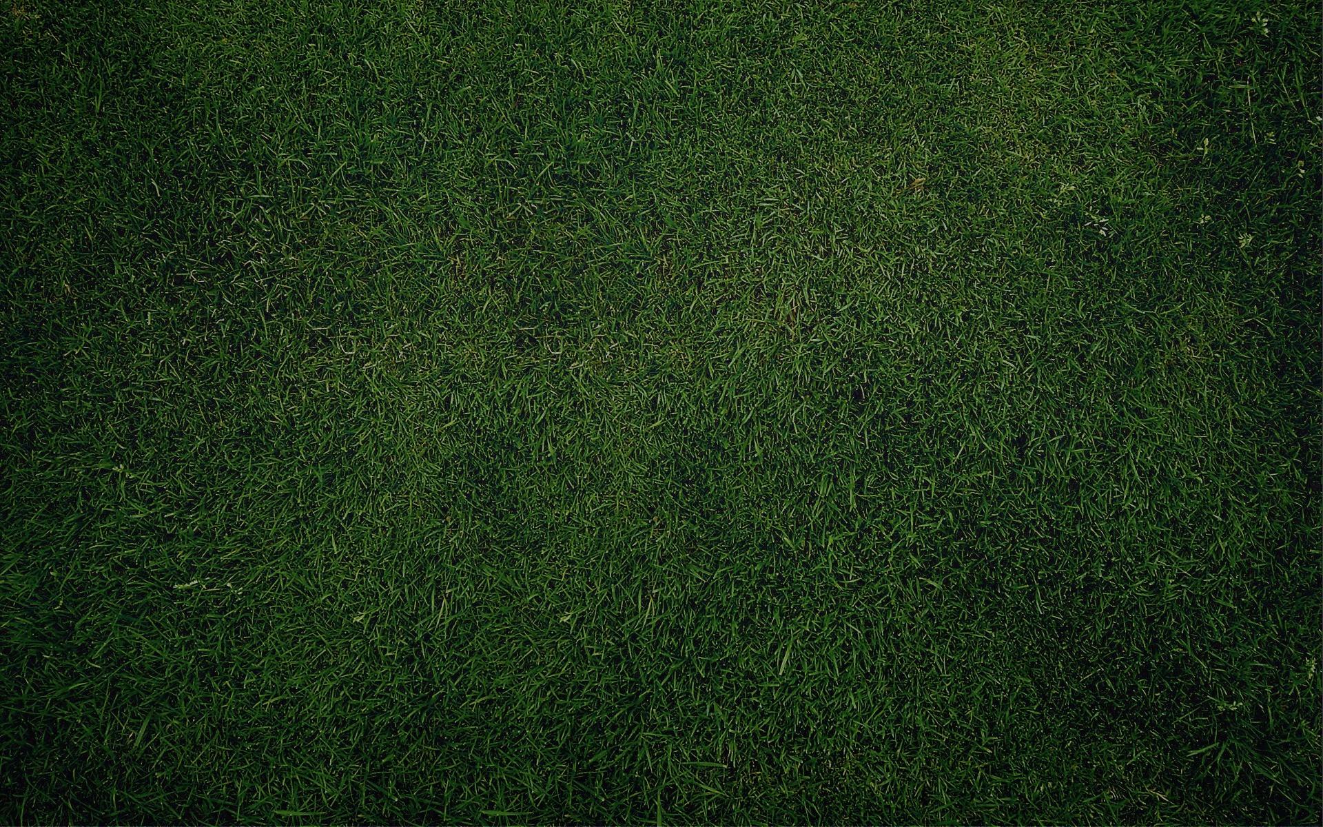 background, wallpapers, green, grass, wallpapaer