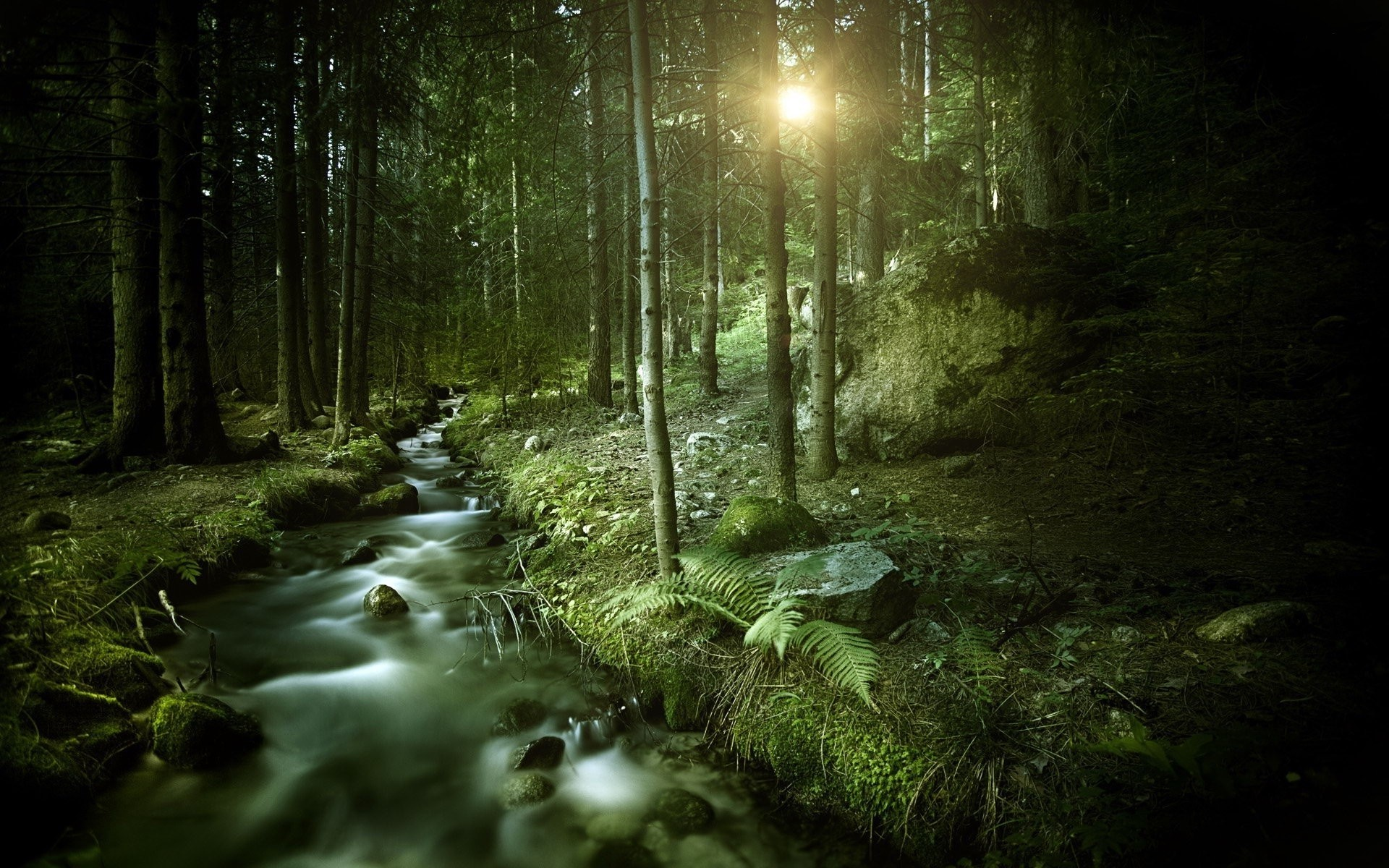 DArk Forest HD Wallpapers : Find best latest Dark Forest HD Wallpapers for  your PC desktop