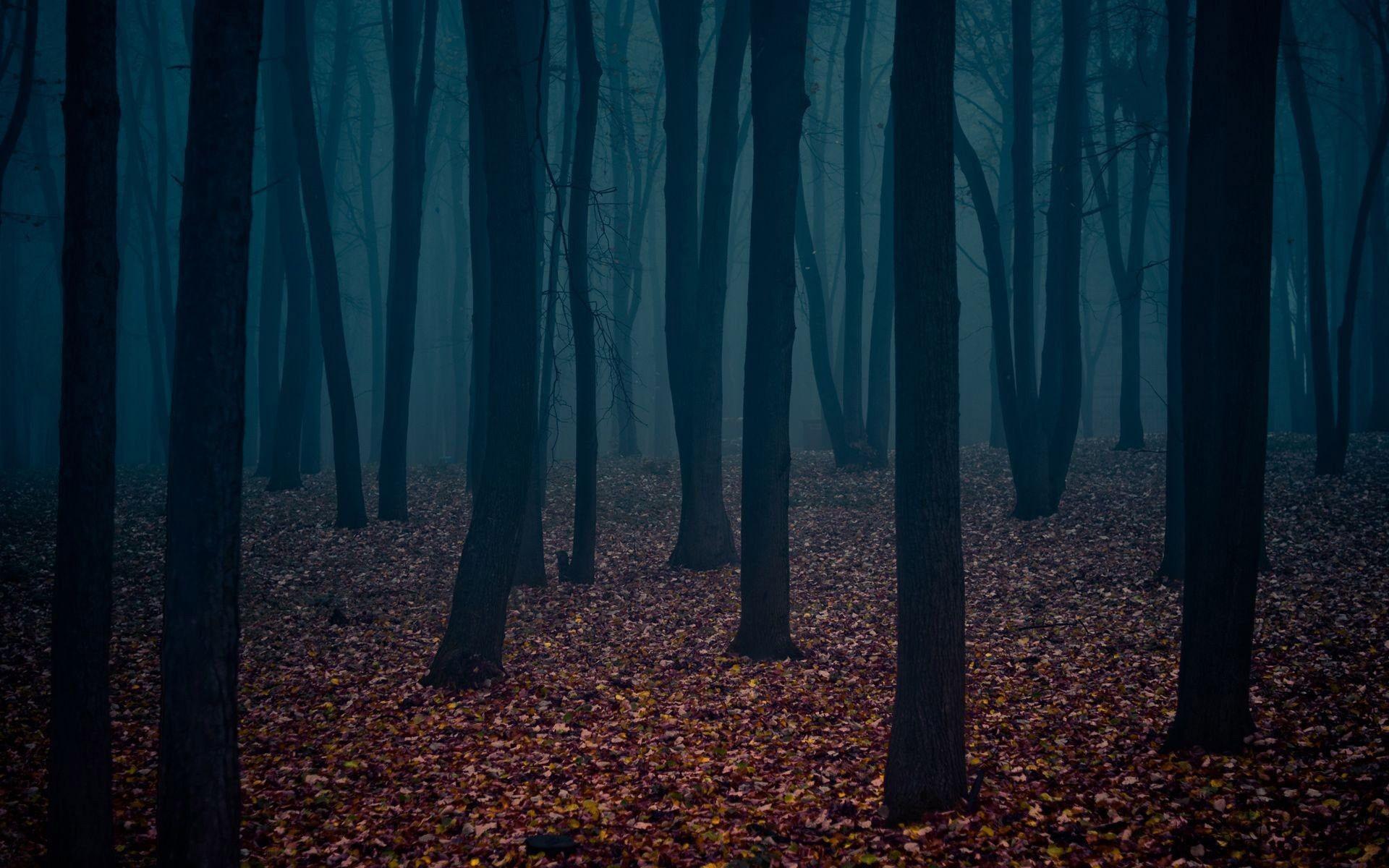 Dark Forest Wallpaper High Quality Resolution