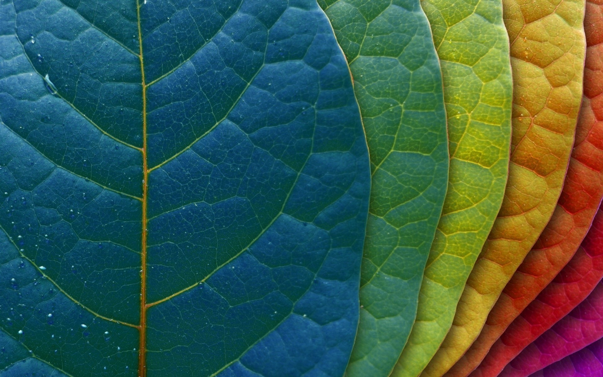 Colored leaves Wallpapers, Colored leaves Backgrounds, Colored .