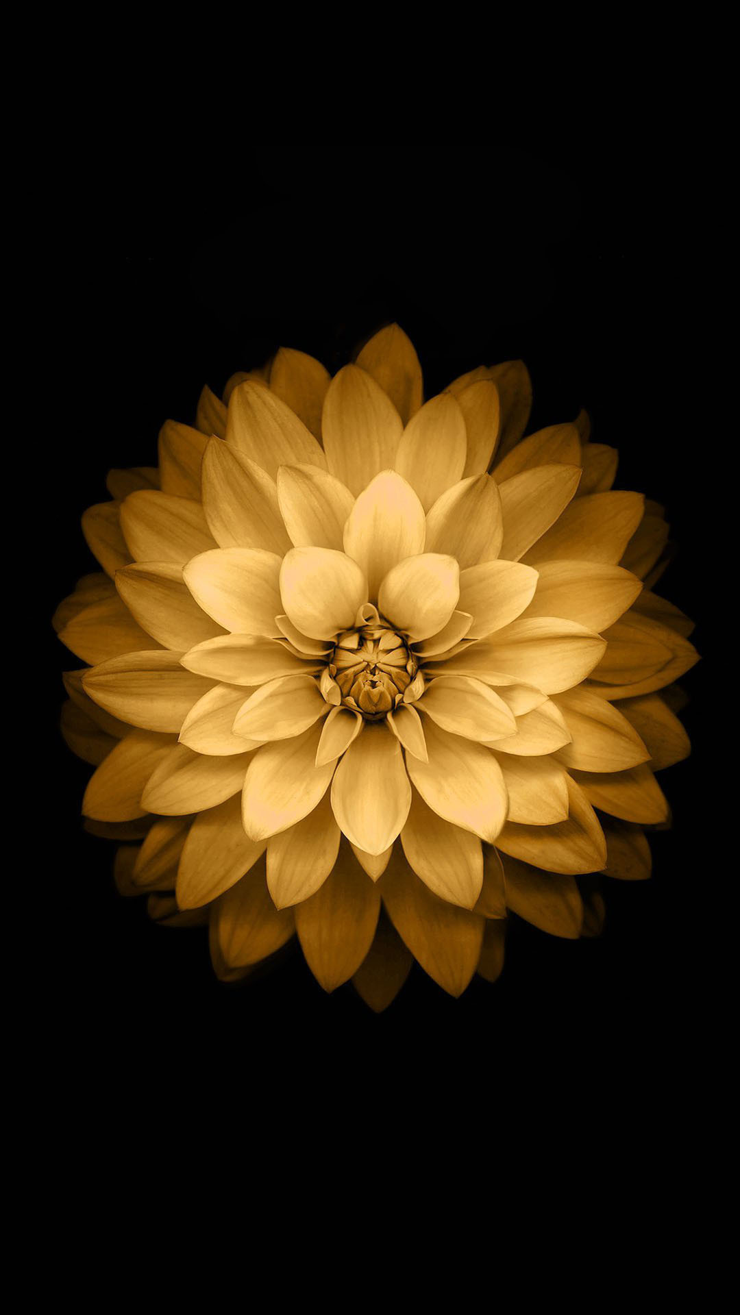 Download Golden Lotus Flower iOS Wallpaper