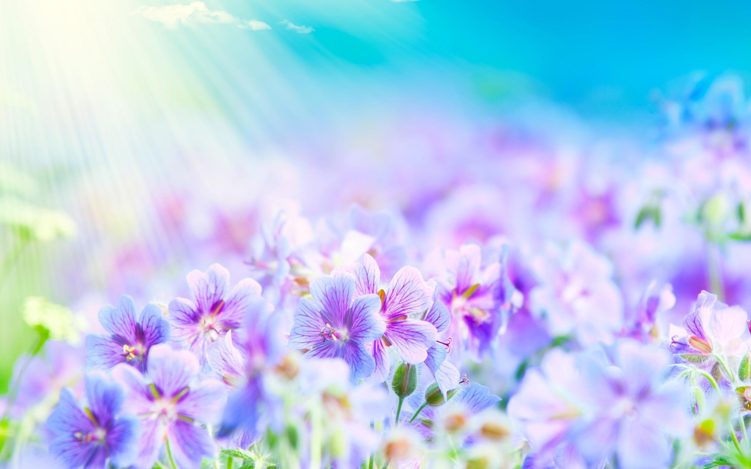 purple white flower. Â«Â«