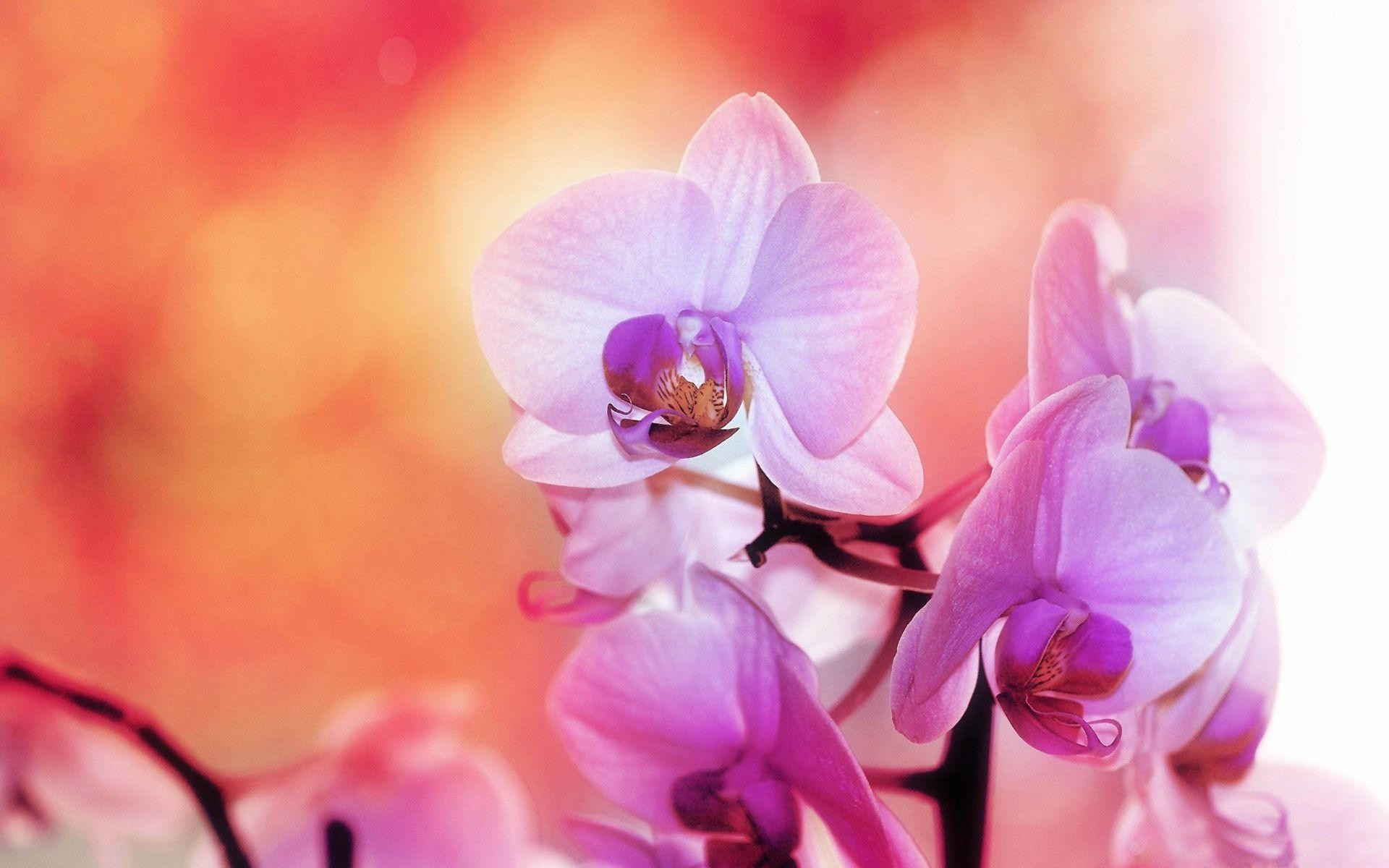 Purple white orchids Wallpapers | Pictures