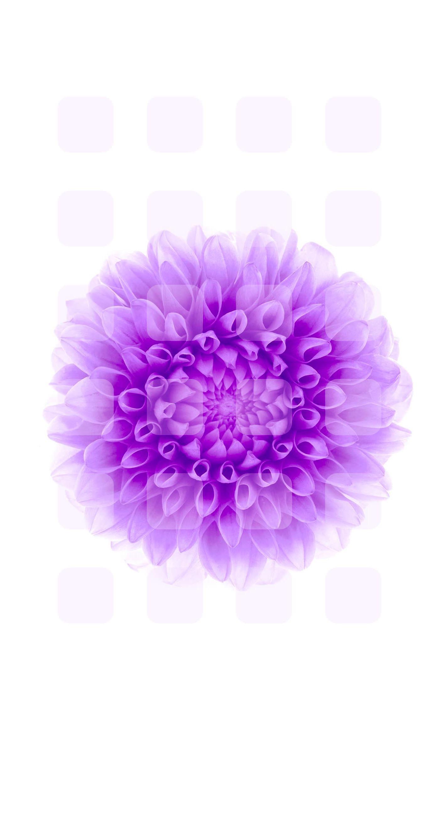 flower purple white shelf | wallpaper.sc iPhone6sPlus