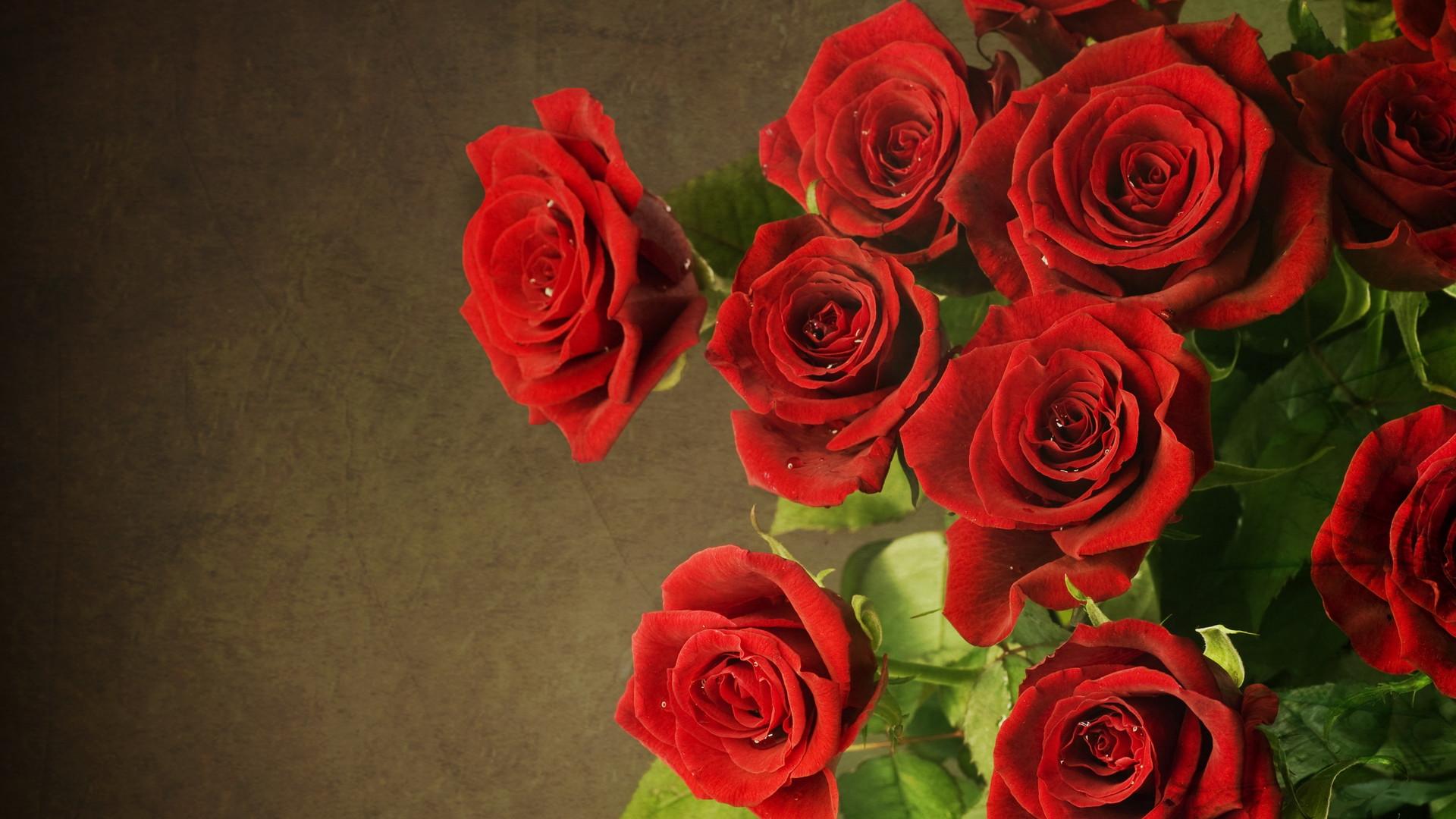 Rose Wallpaper 10