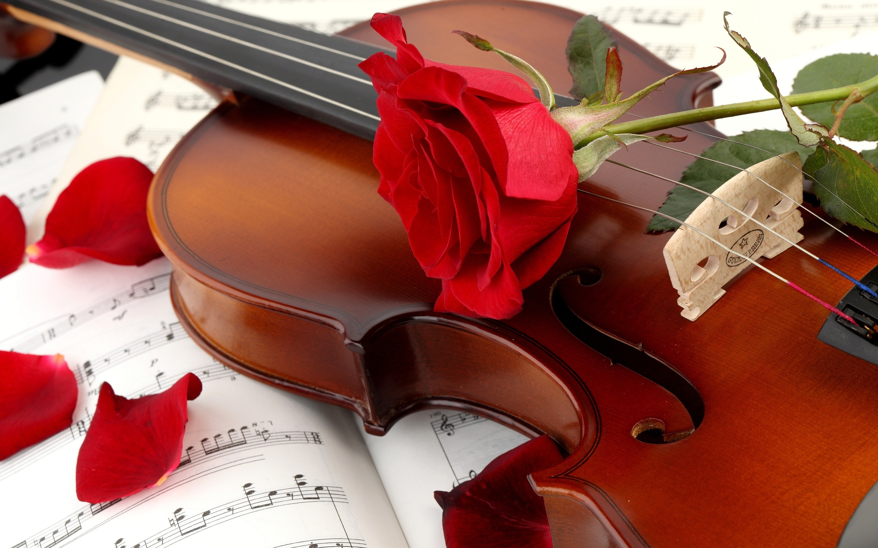 … red-rose-with-violin-hd-free-wallpapers …