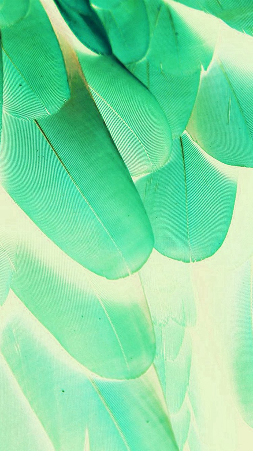 Feather Green Blue Nature Texture Animal Pattern iPhone 6 wallpaper