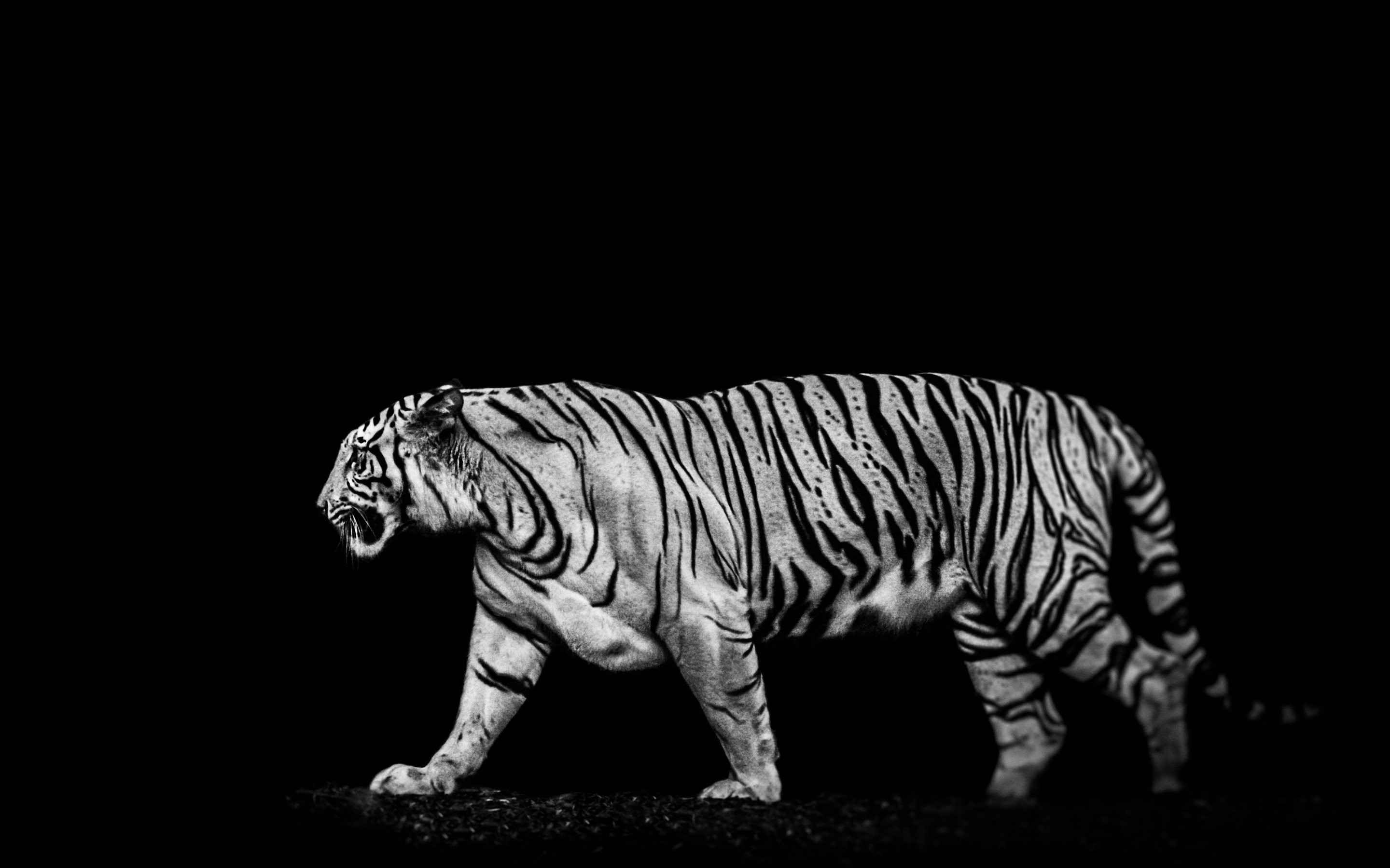 4K HD Wallpaper: Tiger Out of the Dark