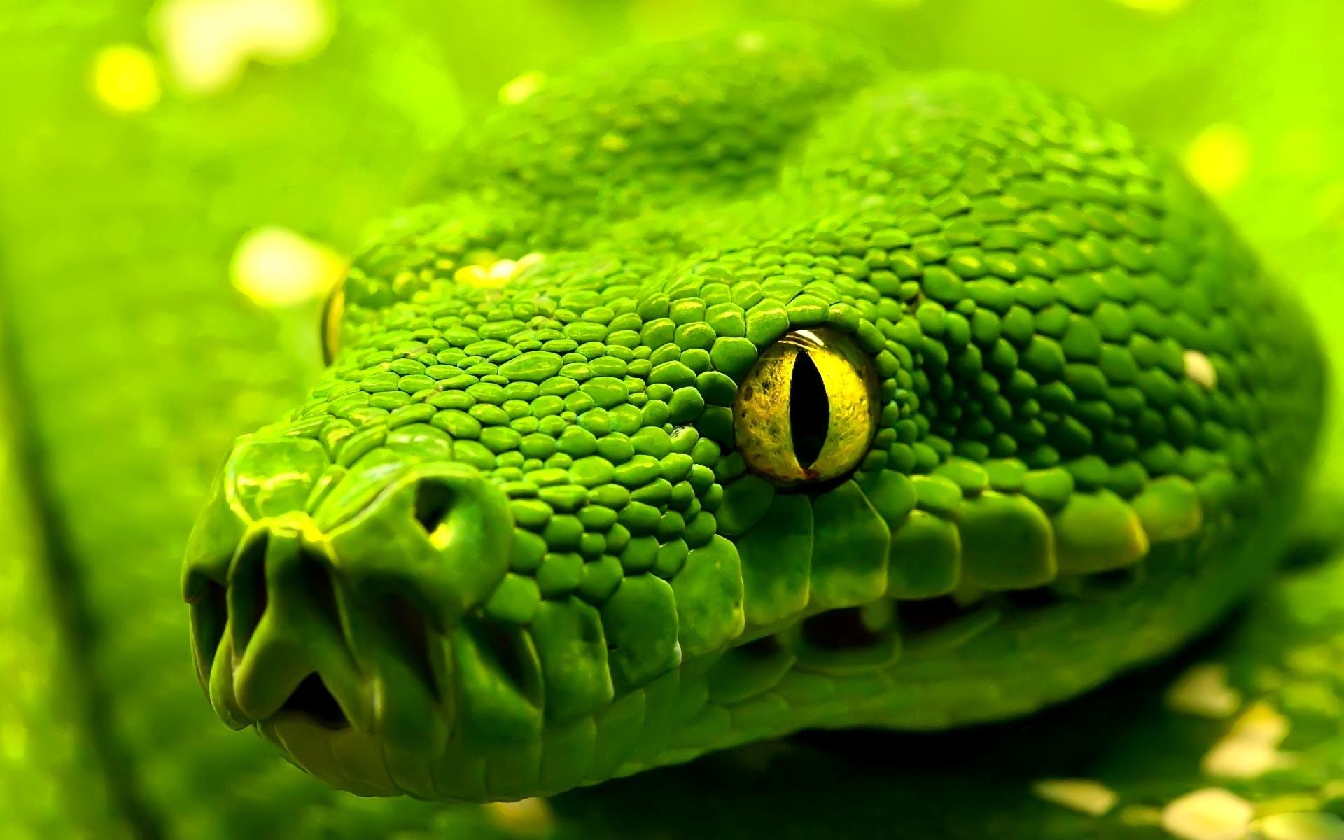 "Snake · Related Post ""Plain Green Wallpaper"". Cool Dj Background"