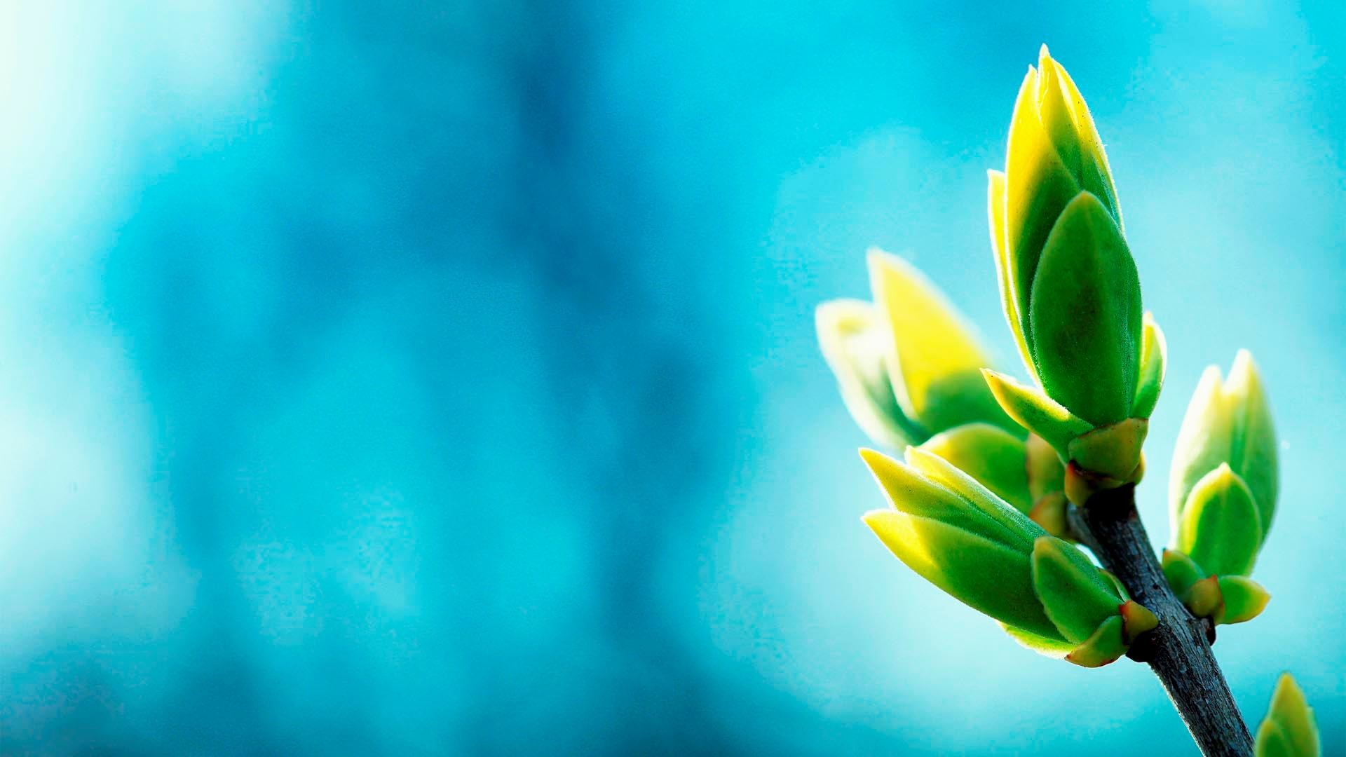 wallpaper.wiki-Blue-And-Green-Wallpaper-HD-PIC-