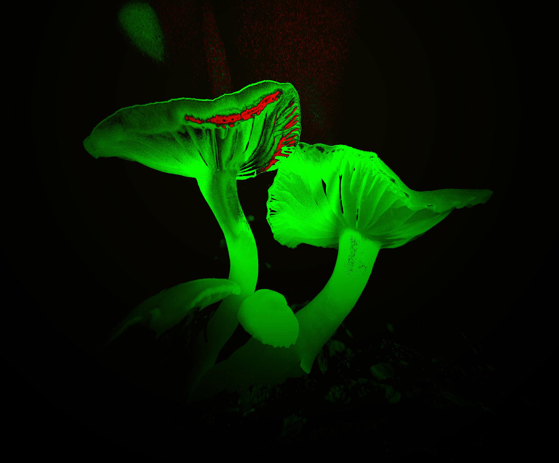 Bright neon green mushroom wallpaper