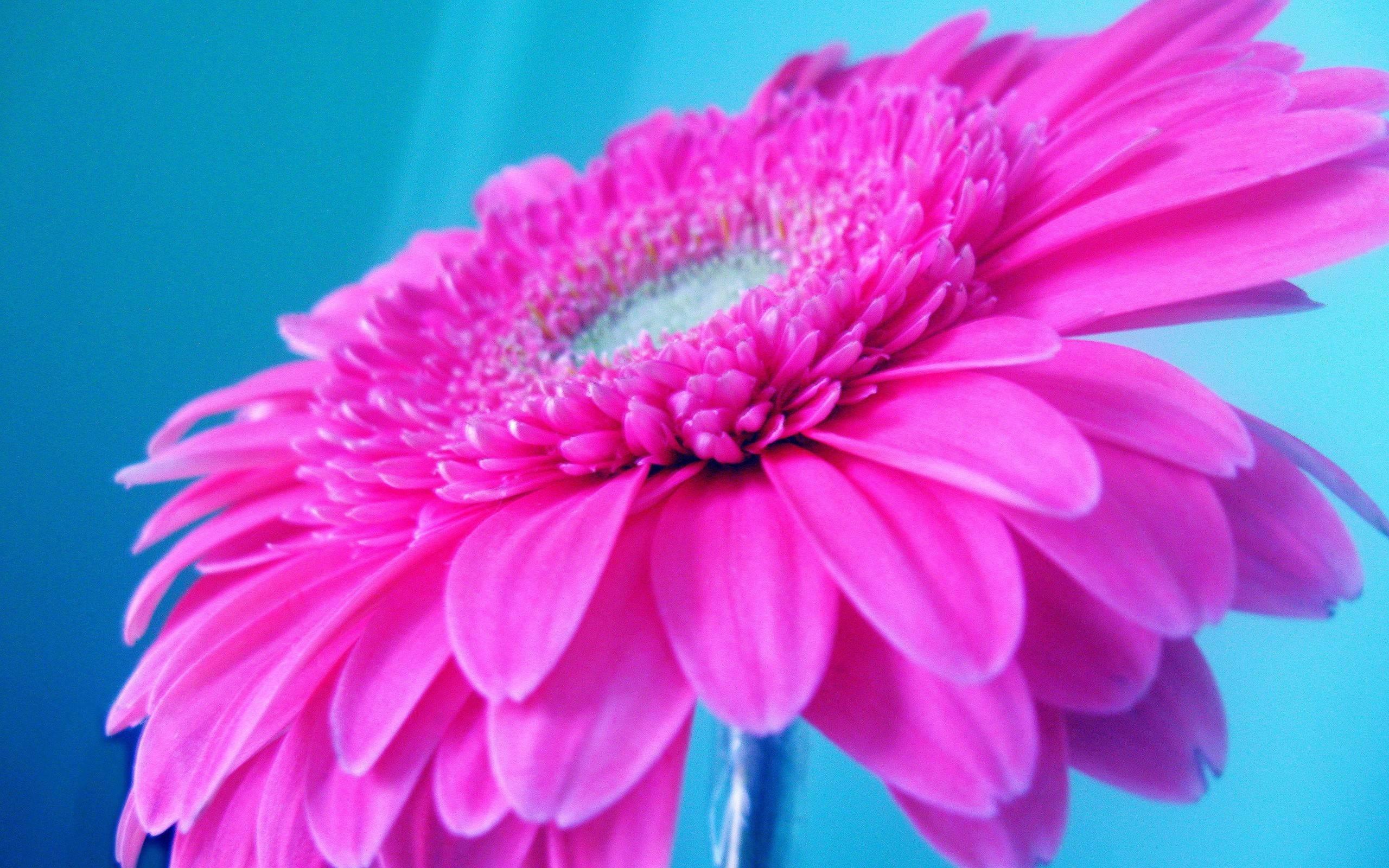 … neon pink wallpaper angelsinnight org; bright pink wallpapers wallpaper  cave …