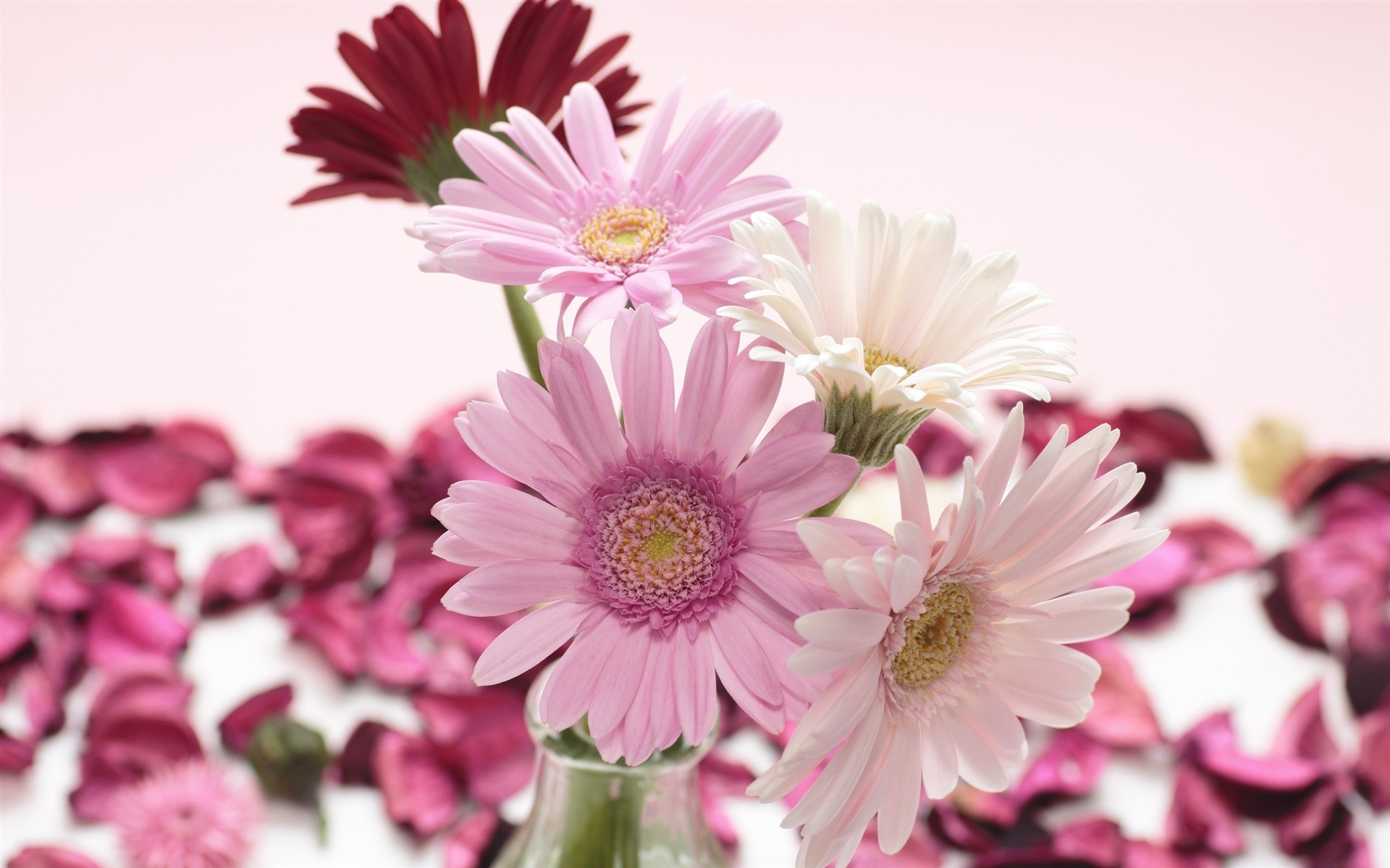 White And Pink Flower Wallpapers Iphone : Flower Wallpaper .
