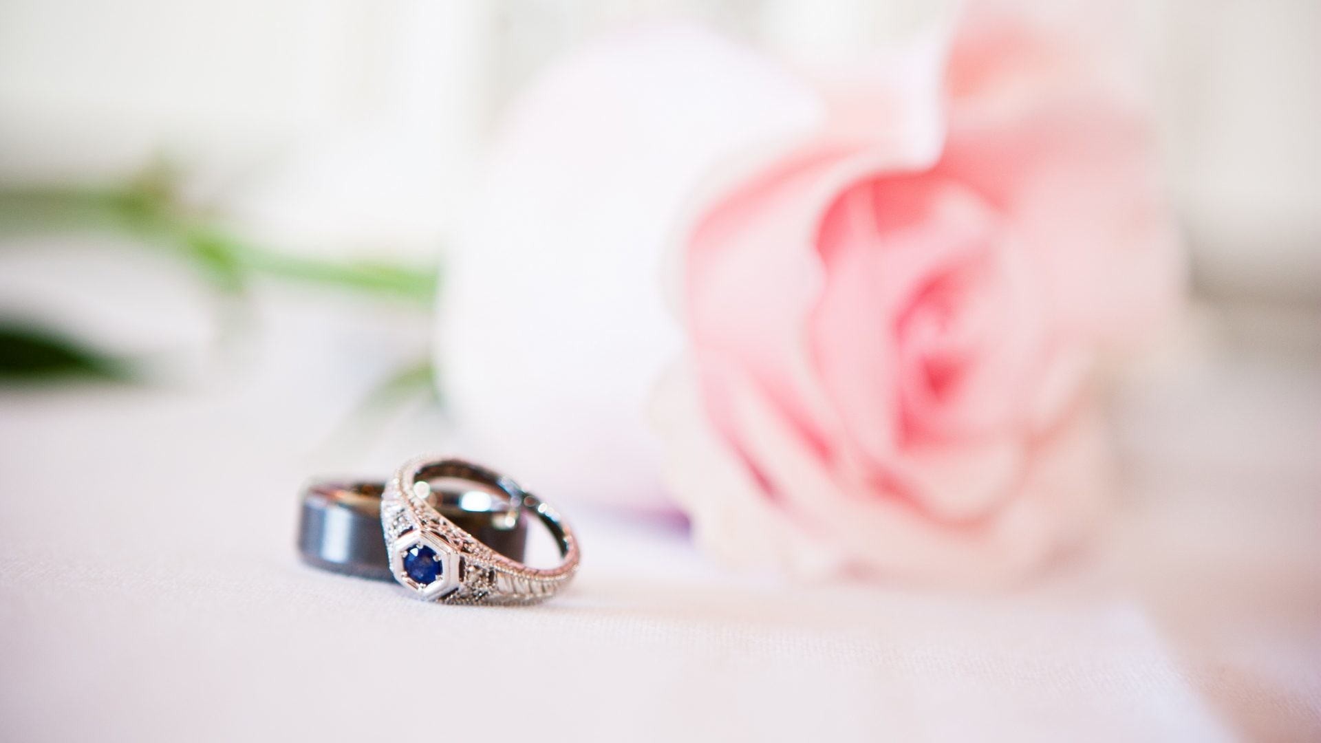 Pale Tag – Feelings Sublime Rose Proposal Pretty Pale Pink Nature Pastel  Sweet Love Rings Marriage