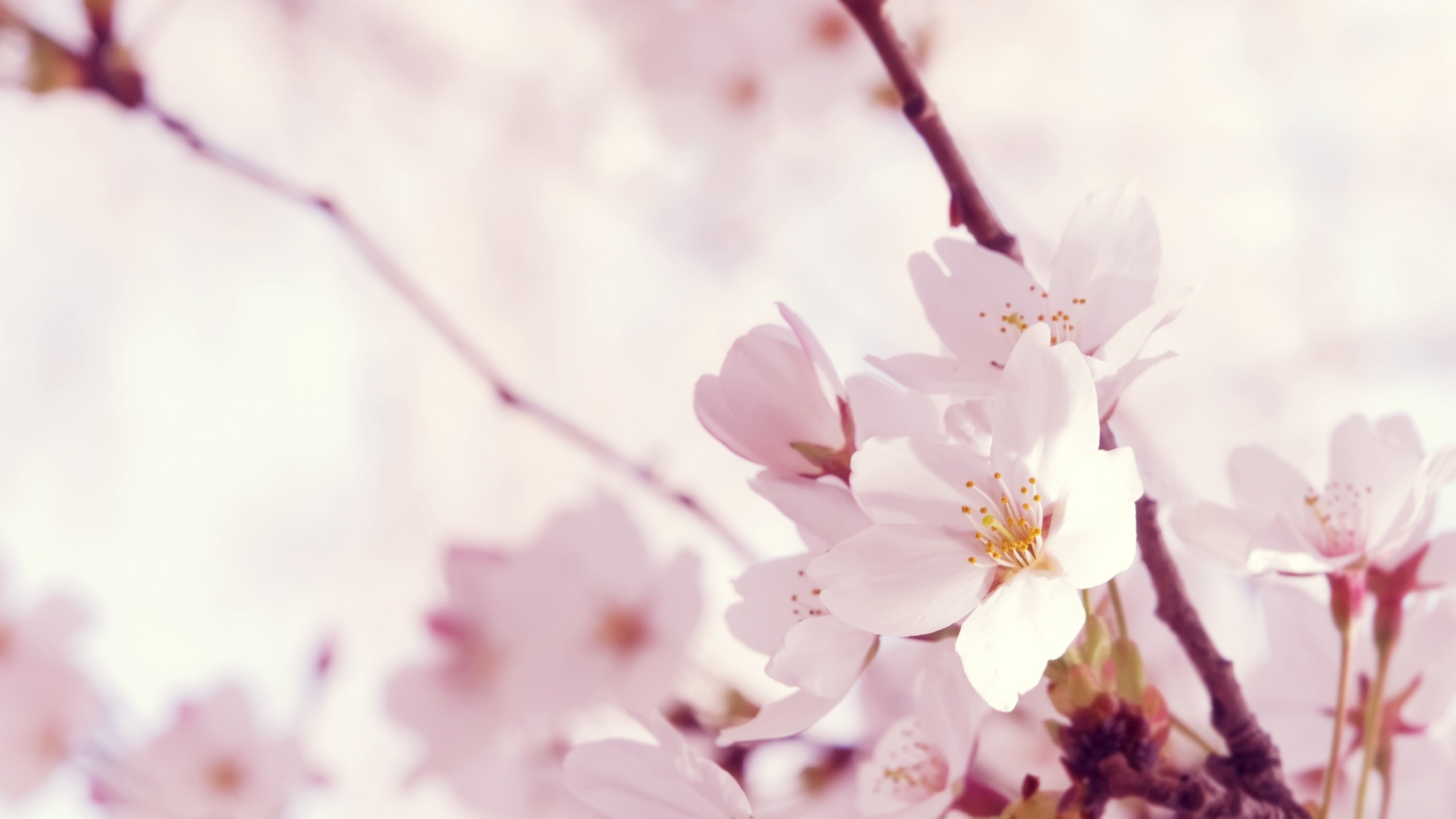 4. pink-and-white-wallpaper11-600×338