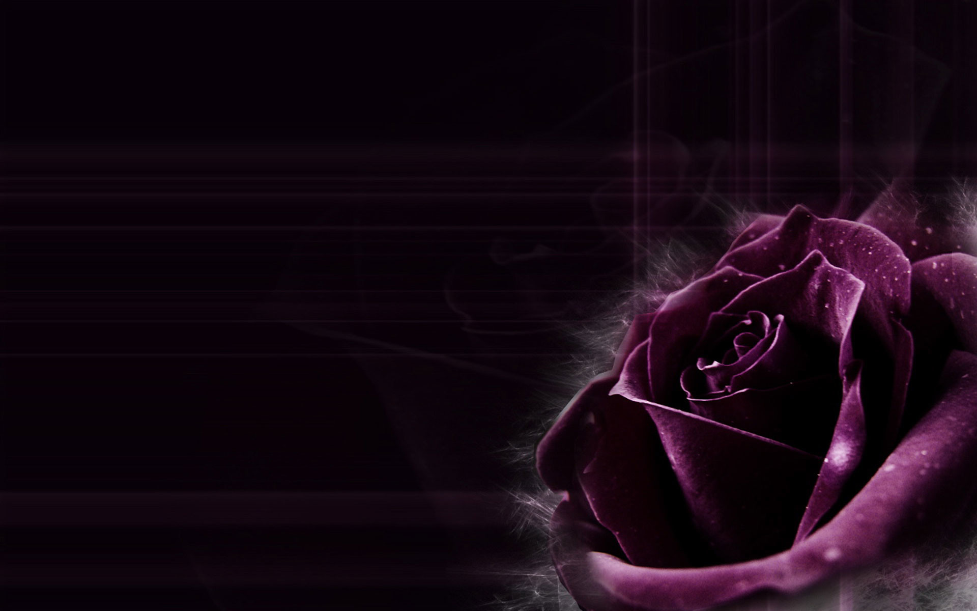 Dark Purple Rose Backgrounds Images & Pictures – Becuo