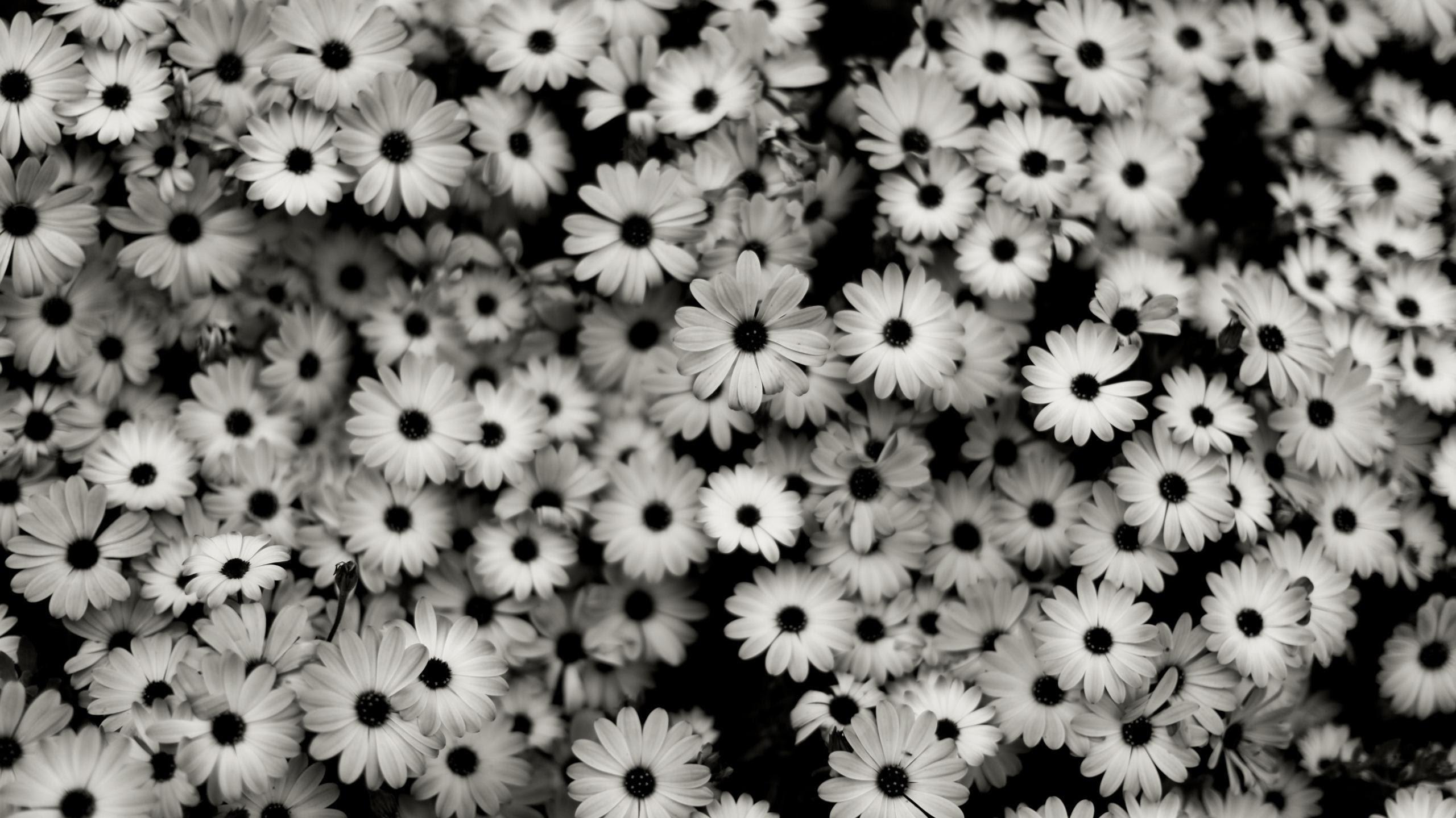 Explore Black Wallpaper, Photo Wallpaper and more!