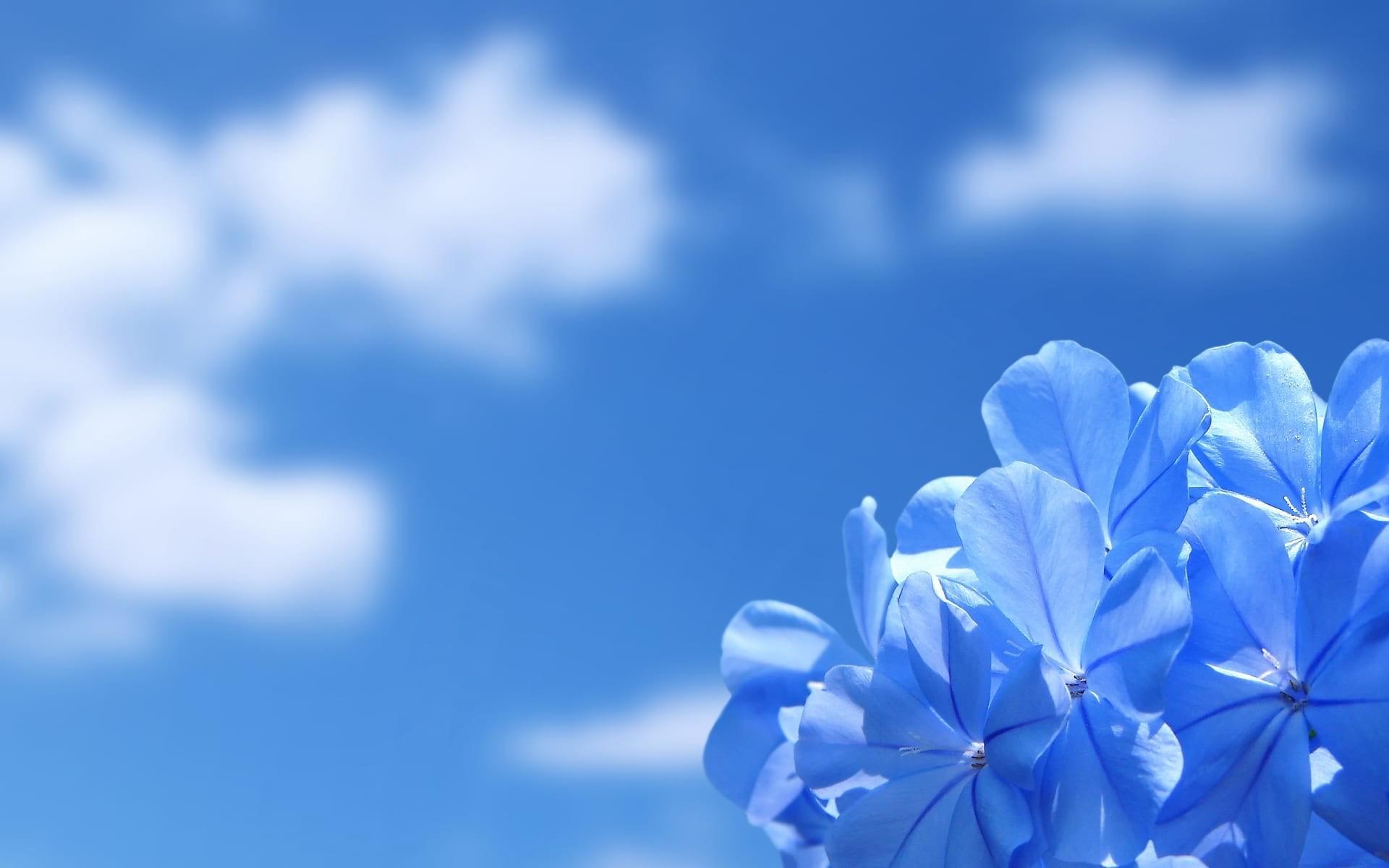 Blue Flower Desktop Backgrounds Wallpaper