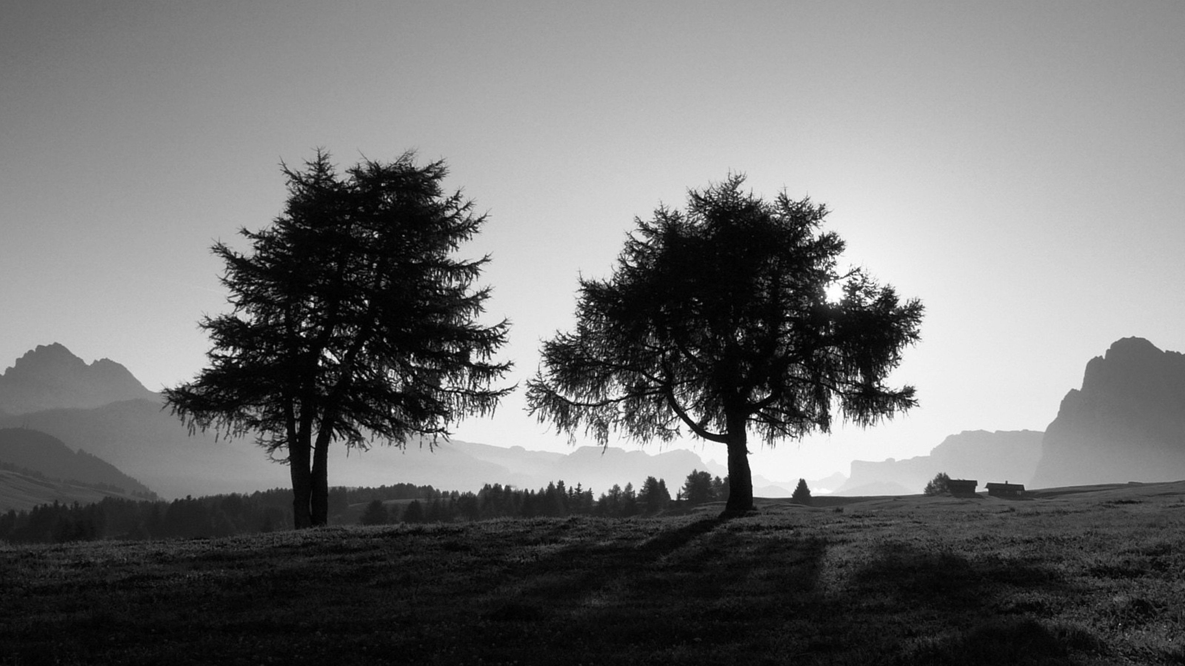 Preview wallpaper trees, slope, black-and-white 3840×2160