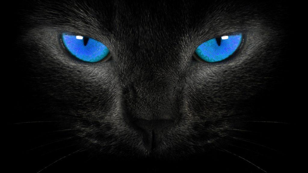 hd-wallpapers-blackblue-wallpaper-black-cat-blue-eyes-