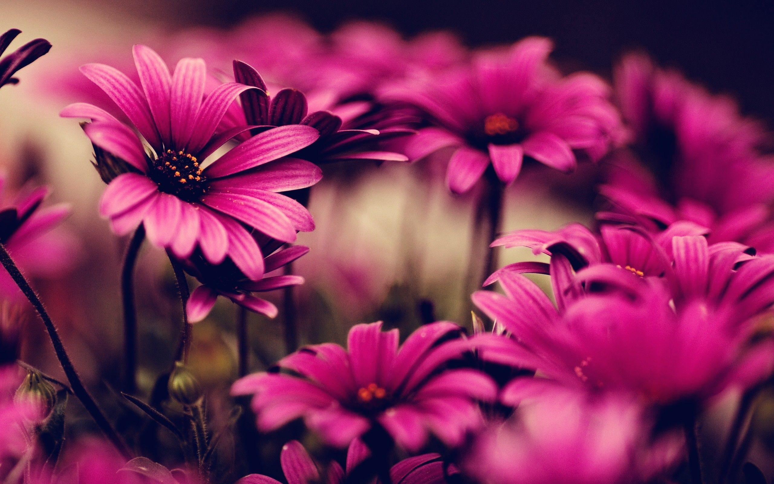 Flower Wallpaper Pink Phone