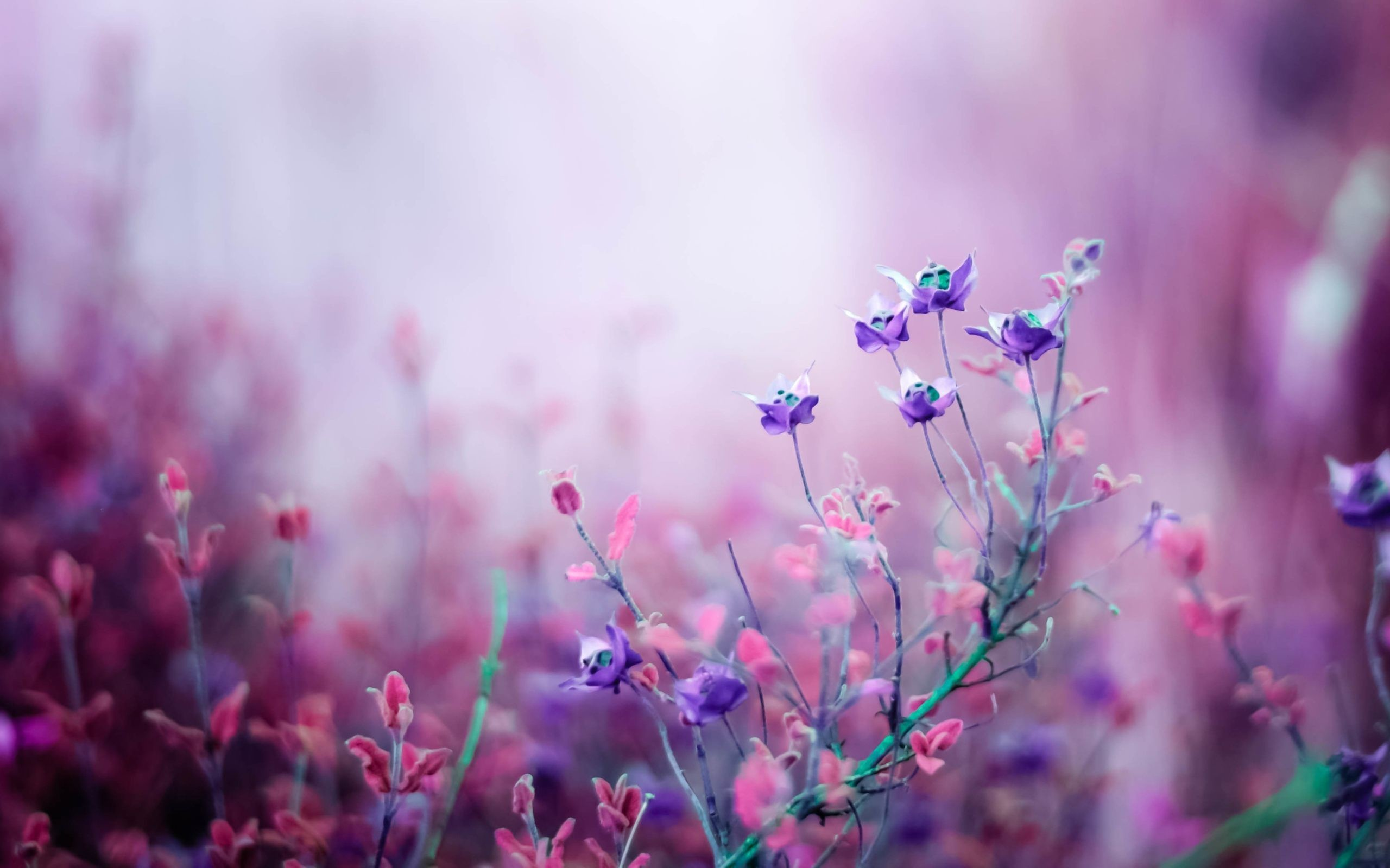Pink and purple desktop wallpaper wallpapersafari – Free Pink Flower  Wallpaper Wallpapersafari. Download