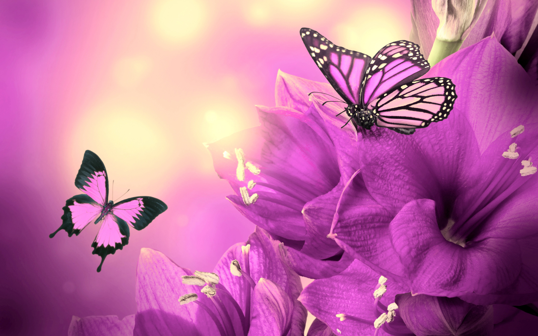 Purple Flowers Butterflies HD Wallpapers – High Definition Wallpapers