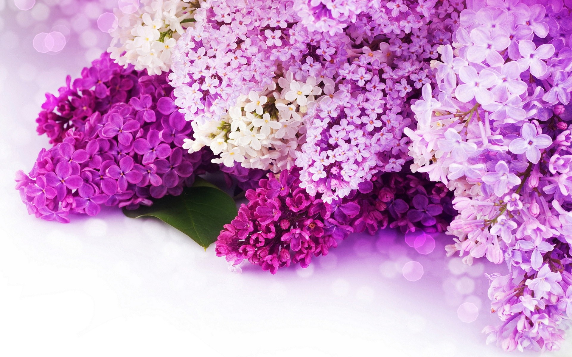 Pink and Purple Flower Background, wallpaper, Pink and Purple Flower .