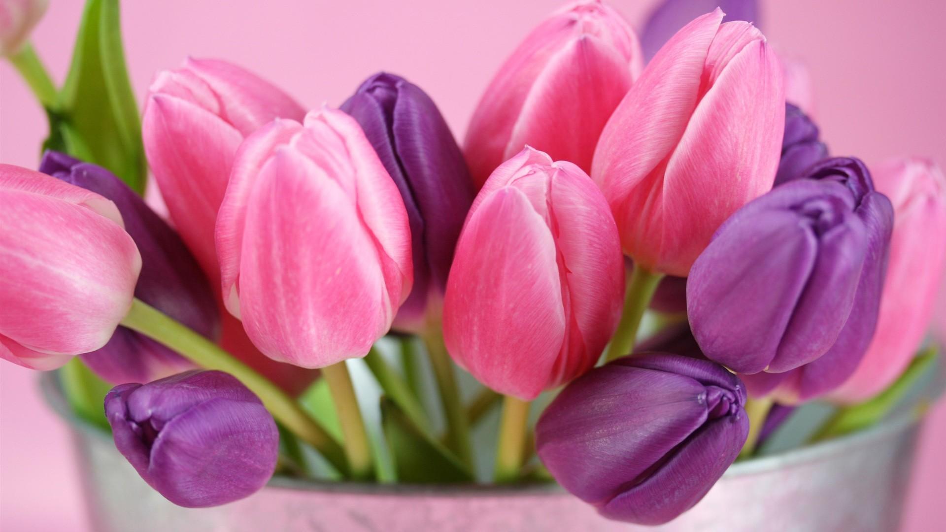 flowers-tulips-purple-wallpaper-pink-flower-wallwuzz-hd-wallpaper-18947 –  Magic4Walls.com
