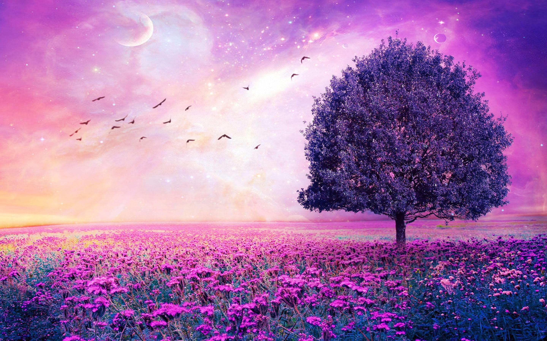 Purple Flowers Field Art Tree HD Wallpapers – High Definition .