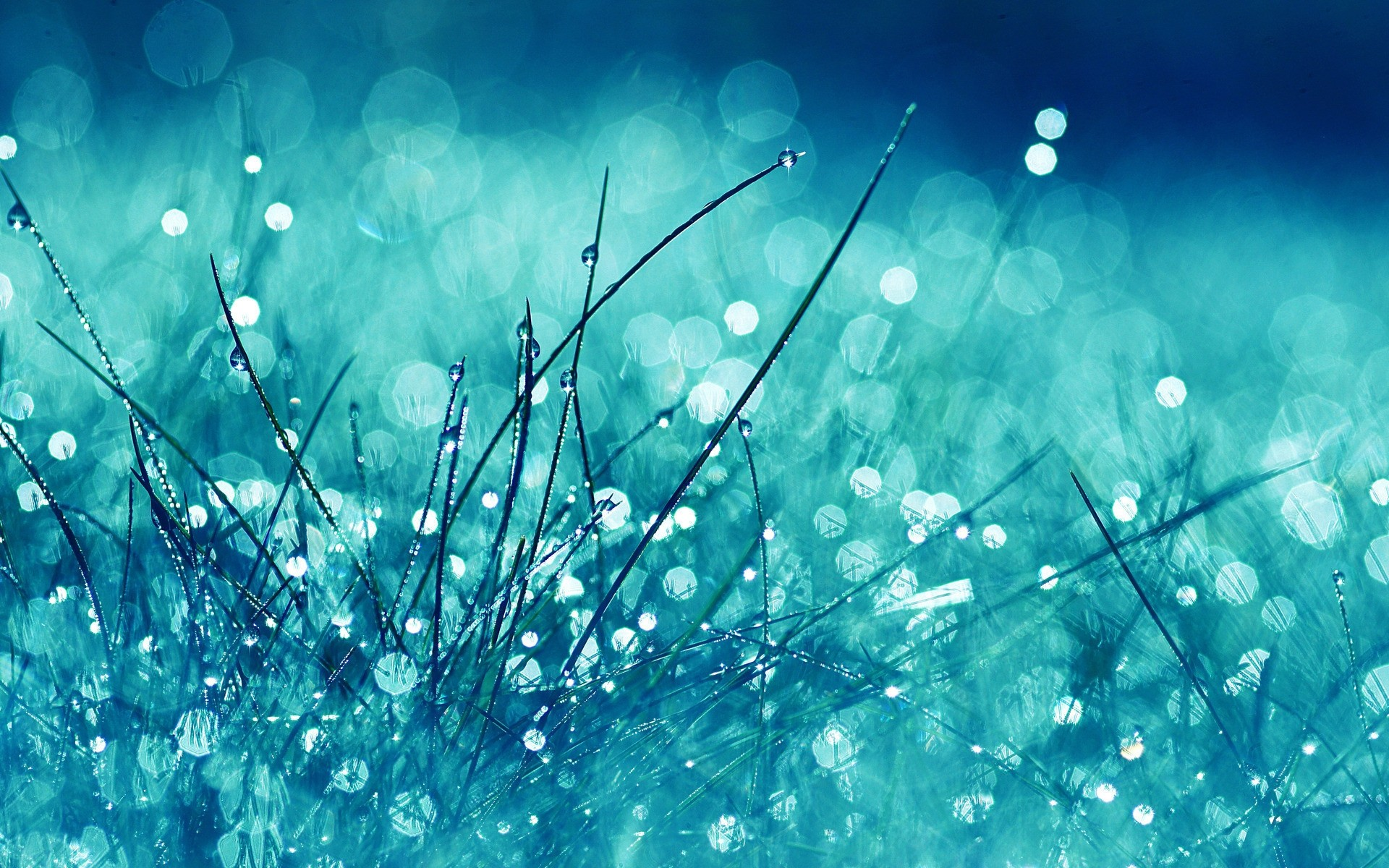 Grass Glitter HD Wallpaper