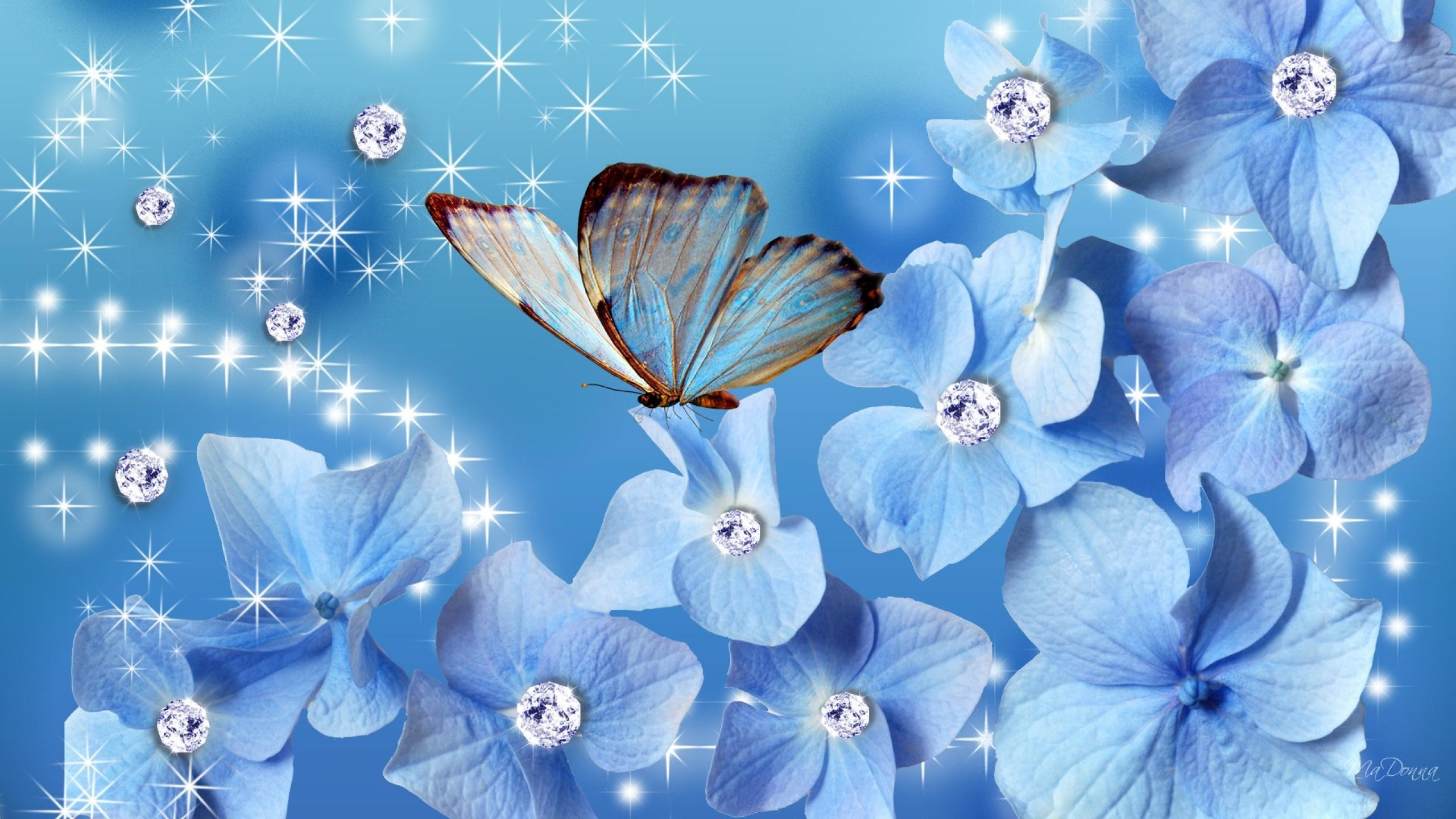 Blue Butterfly Wallpapers Photo Animated Wallpaper Desktop And Blue  Butterfly Wallpapers Wallpapers)