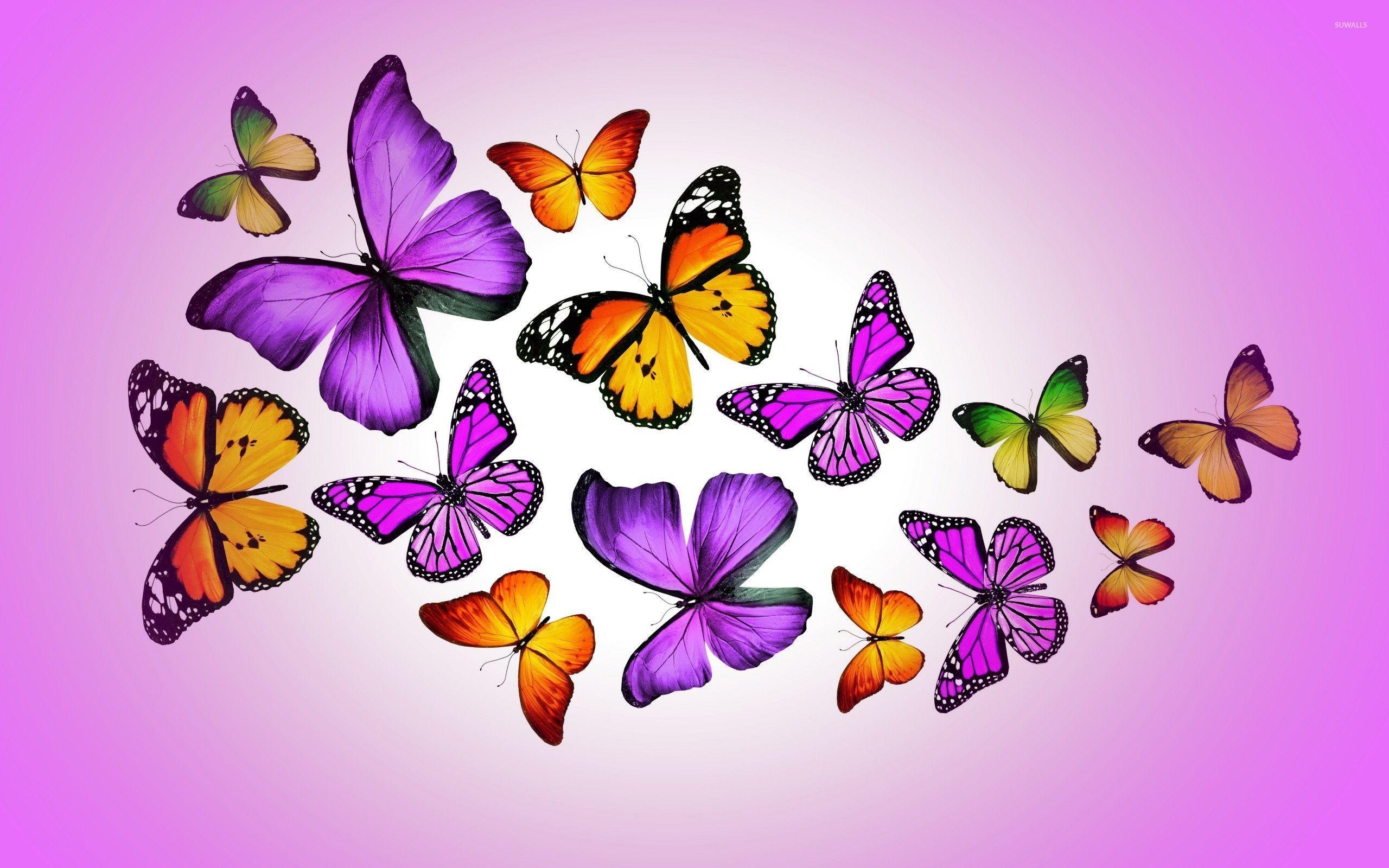 Orange and purple butterflies wallpaper jpg