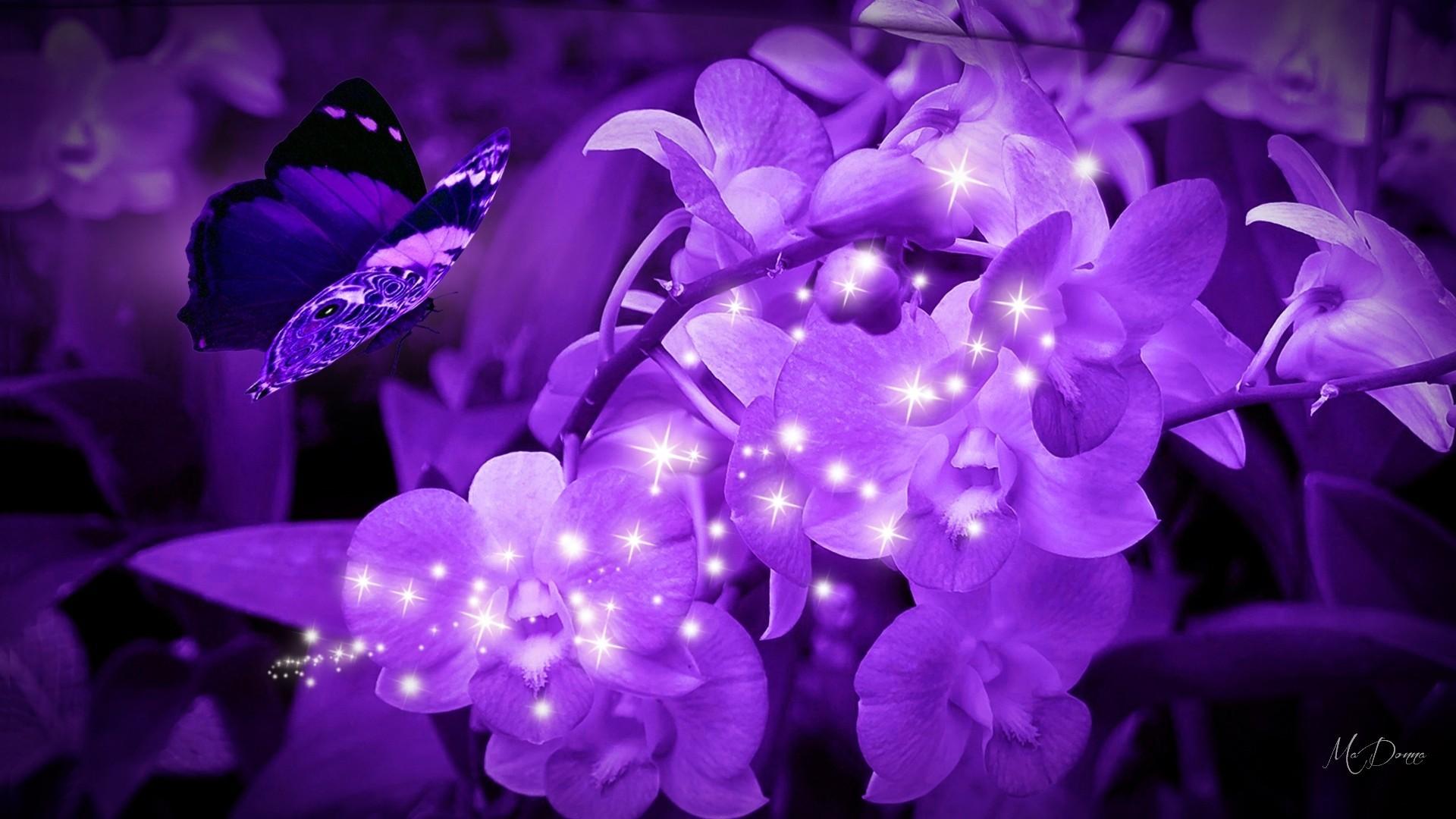 Flowers: Purple Orchids Firefox Persona Theme Flowers Butterflies .
