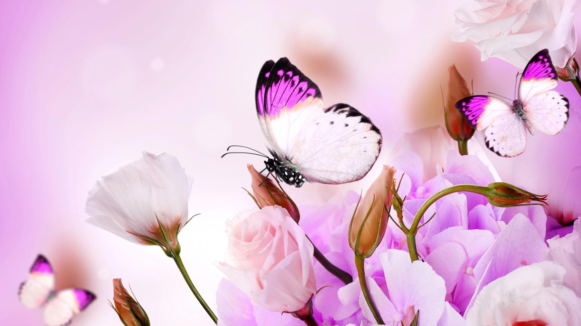 Butterflies Tag – Spring Beautiful Flowers Butterflies Purple Delicate  Flower Wallpaper Macbook for HD 16: