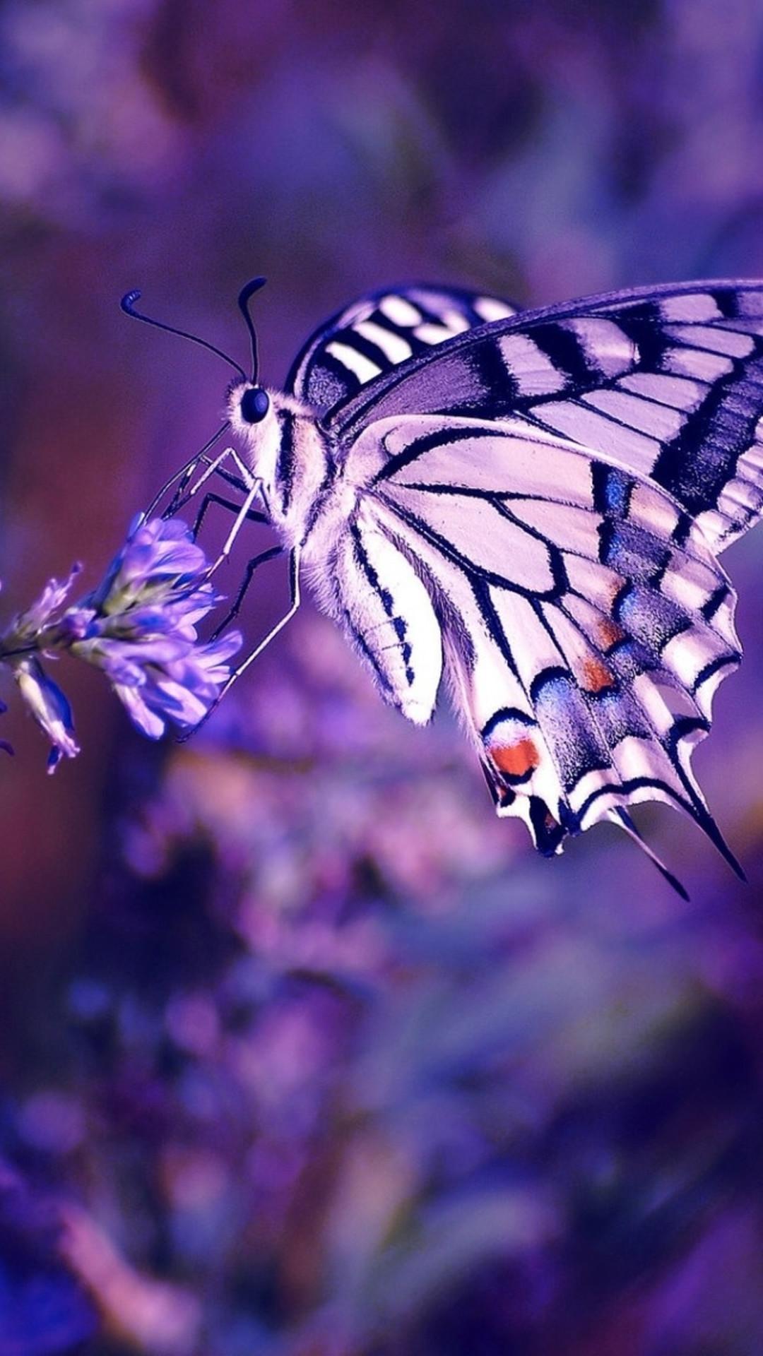 Butterfly iPhone Widescreen Wallpaper.