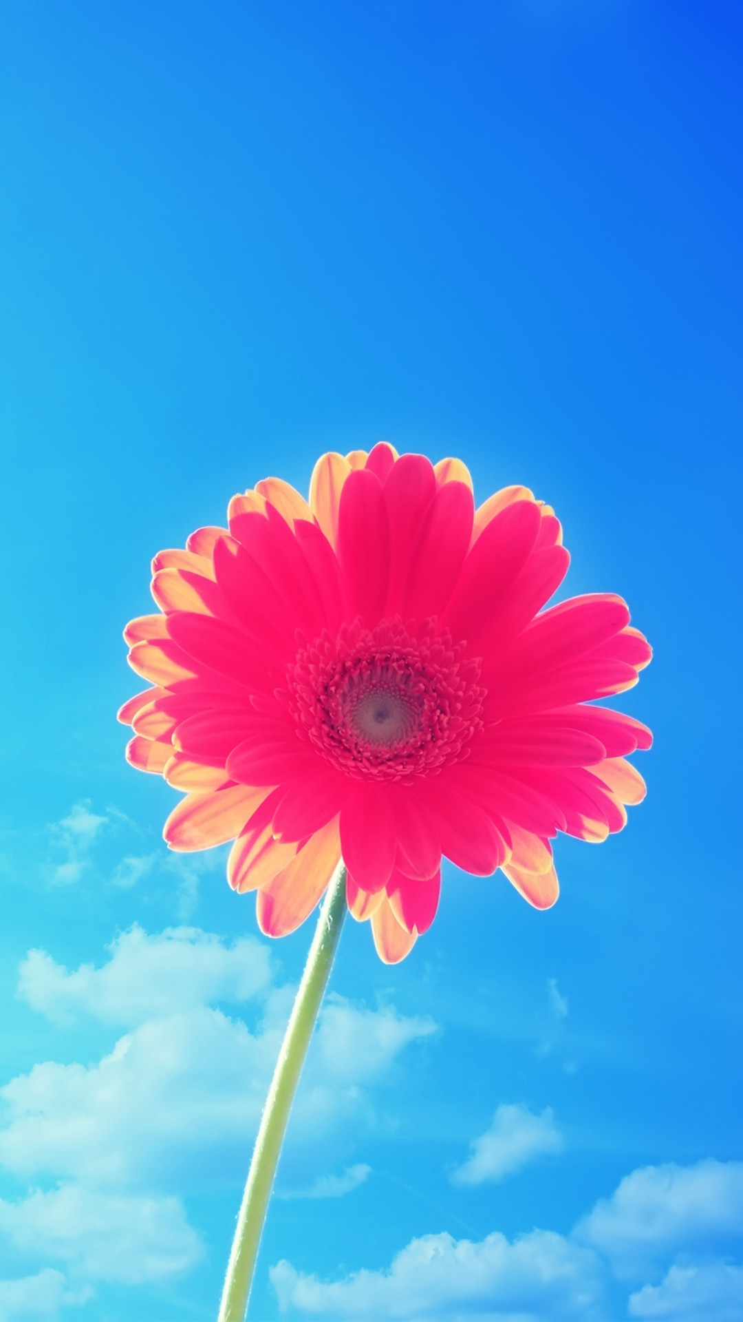 Pink Flower Blue Sky iPhone 6 Plus HD Wallpaper …