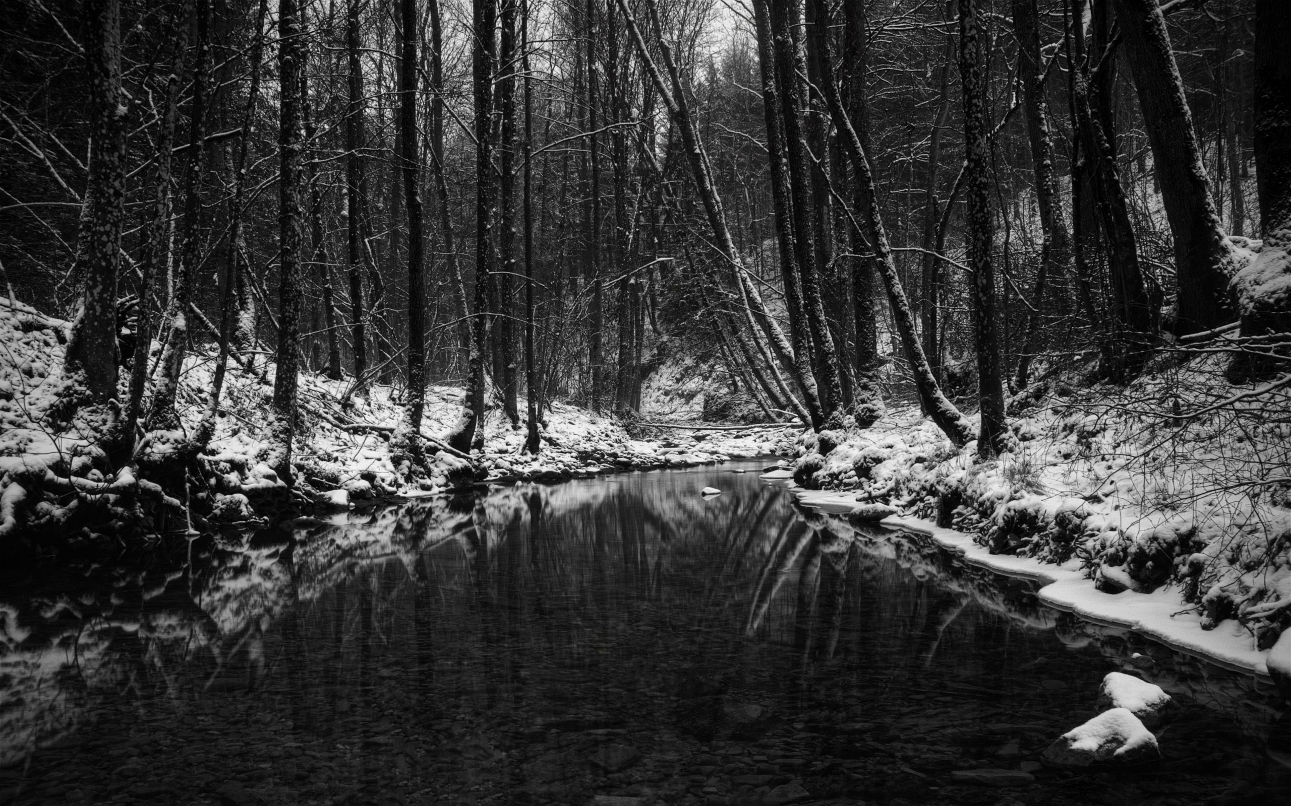 Wallpaper Wood, Stream, Snow, Trees, Black-and-white, Autumn, Late HD,  Picture, Image