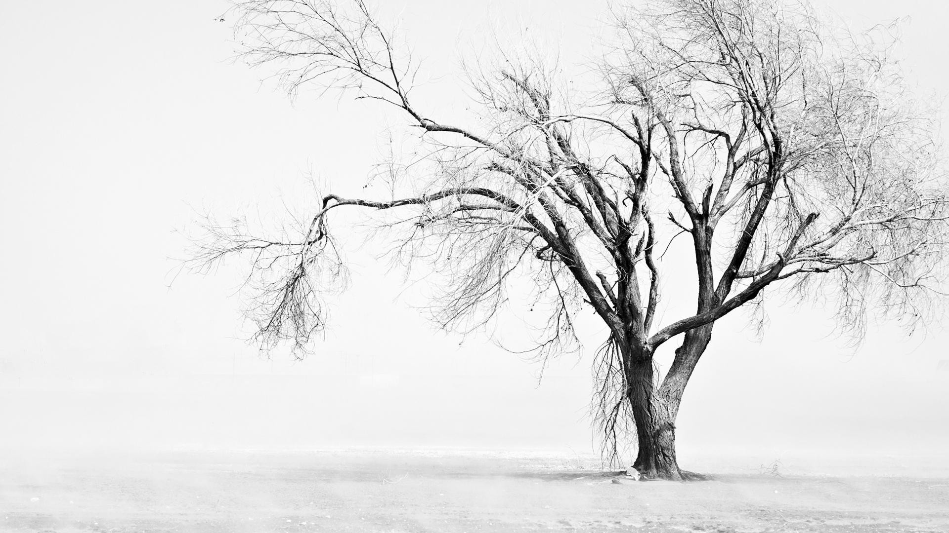 9. black-and-white-hd-wallpapers9-600×338